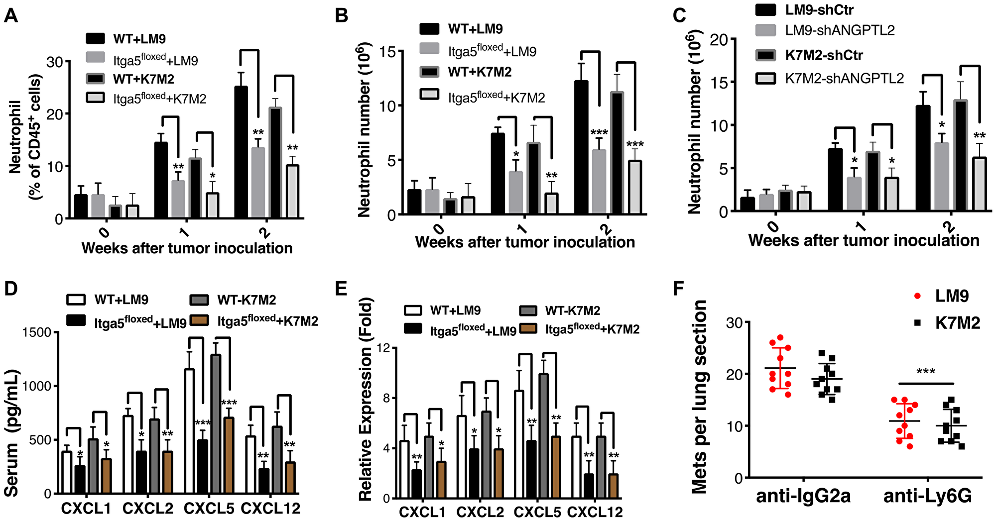 Integrin α5β1 deficiency reduces neutrophil recruitment to the lung.