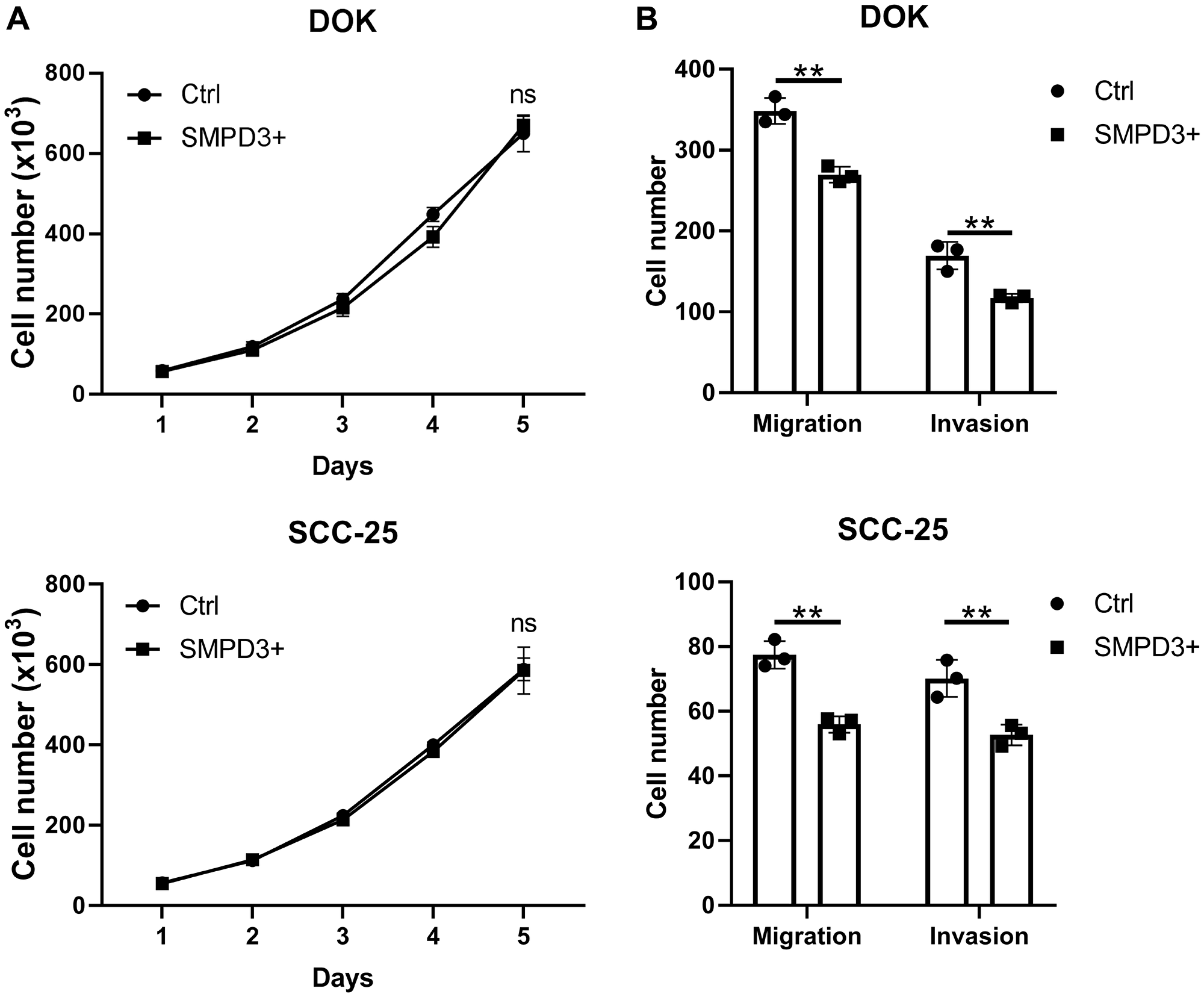 SMPD3 overexpression has no effect on proliferation but decreases migration and invasion of oral dysplasia and cancer cell lines.