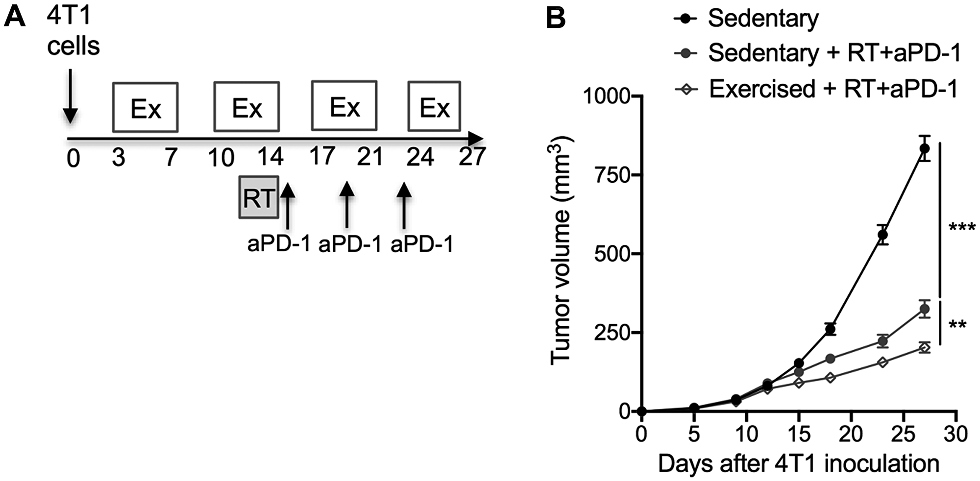 Exercise training as an adjunct therapy potentiates anti-tumor immunity induced by radiotherapy and immunotherapy combinations.