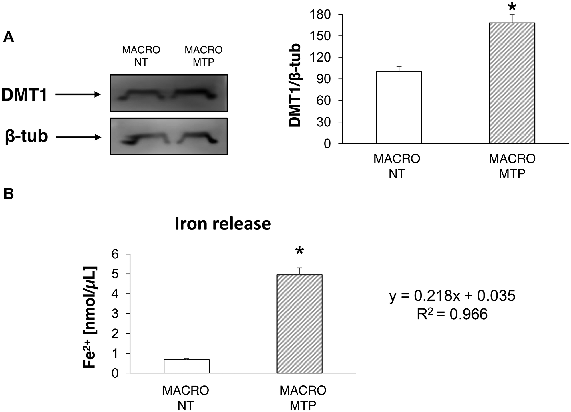 Effects of Mifamurtide (MTP) in macrophages on DMT1 expression and iron release.