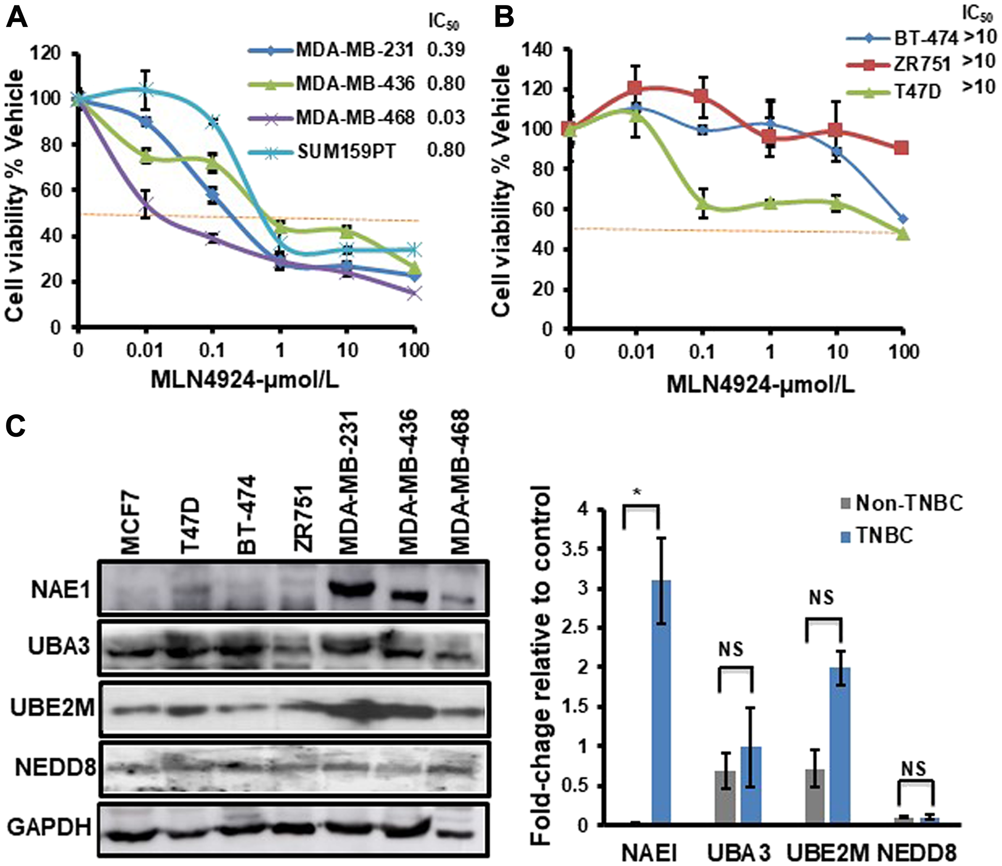 TNBC cells show increased sensitivity to MLN4924 compared to non-TNBC cells and overexpress NAE1.