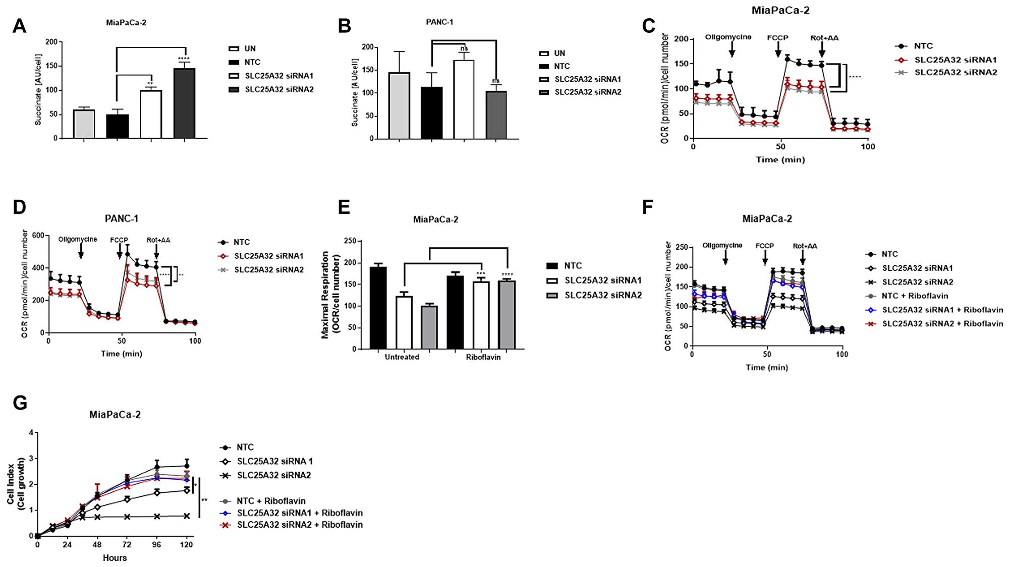 SLC25A32 knock-down impairs mitochondrial FAD metabolism.