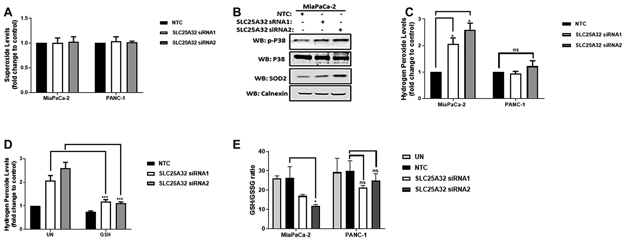 SLC25A32 knock-down induces ROS production and GSH depletion in MiaPaCa-2 cells.