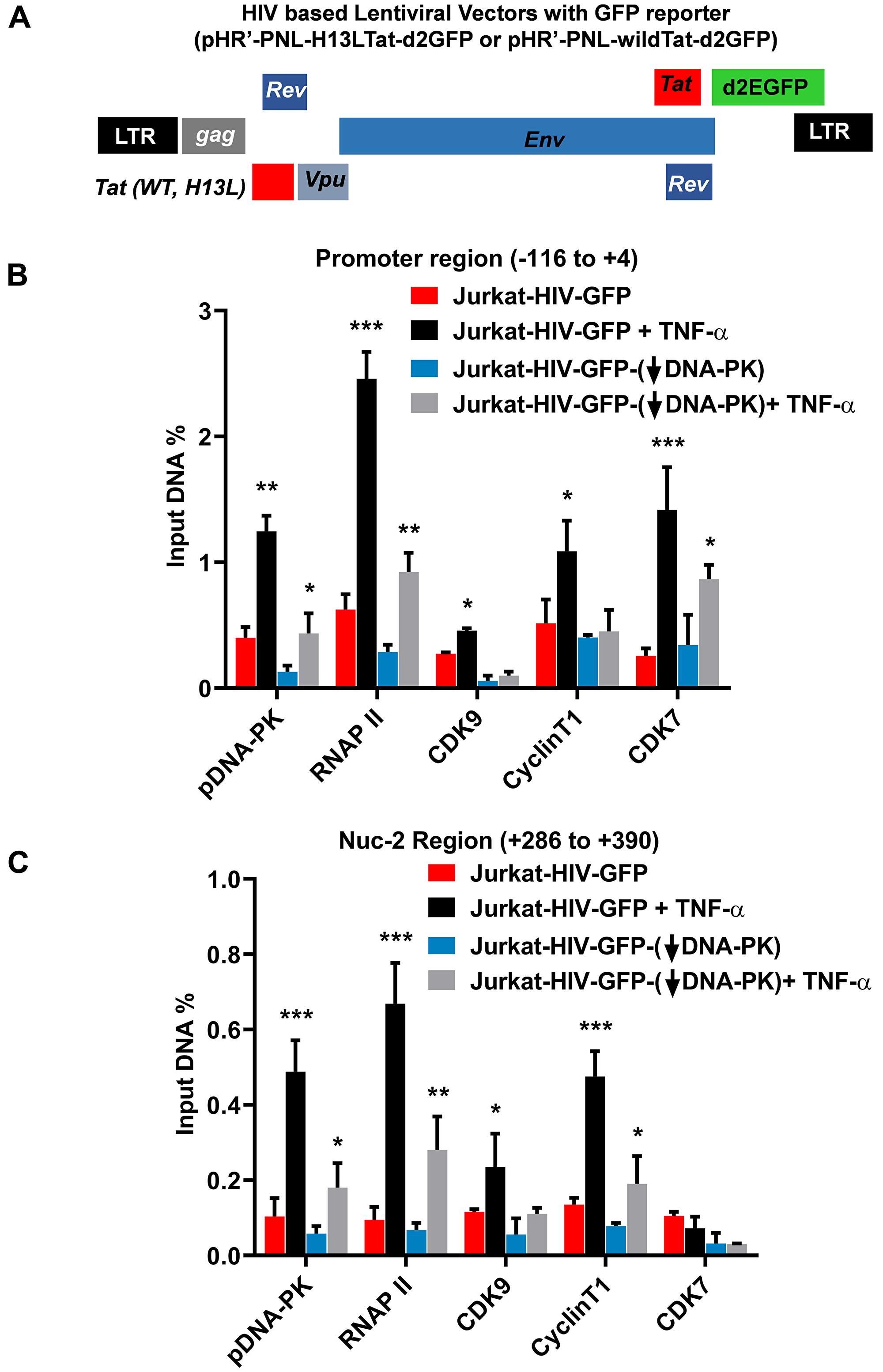 DNA-PK facilitates the recruitment of P-TEFb at HIV LTR.