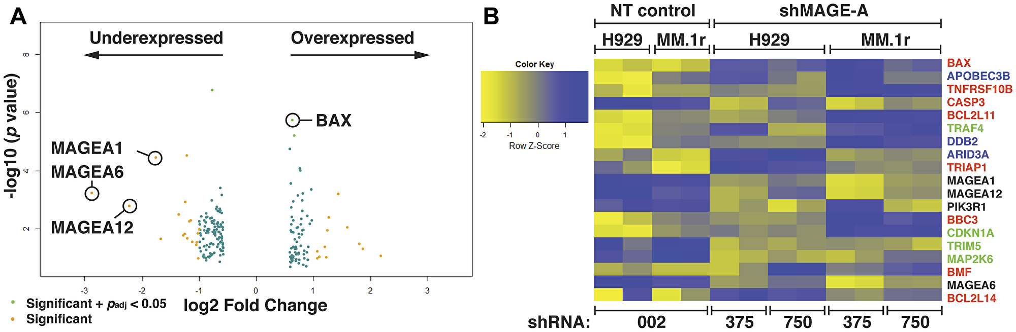 Gene expression profiling of HMCL after silencing of MAGE-A.