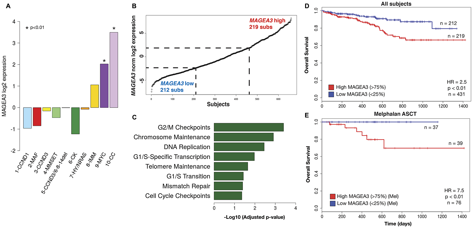 MAGEA3 expression is associated with cell cycling, DNA replication/repair, and poor prognosis.