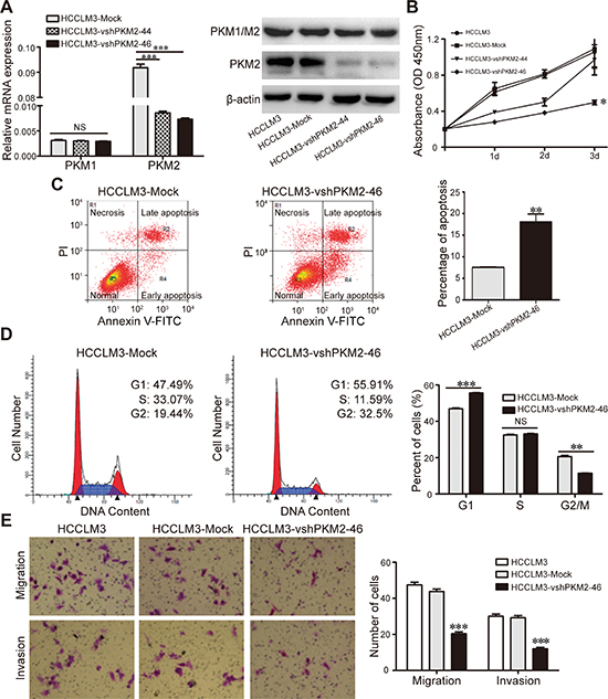 Effect of PKM2 gene suppression on HCCLM3 HCC cell lines.