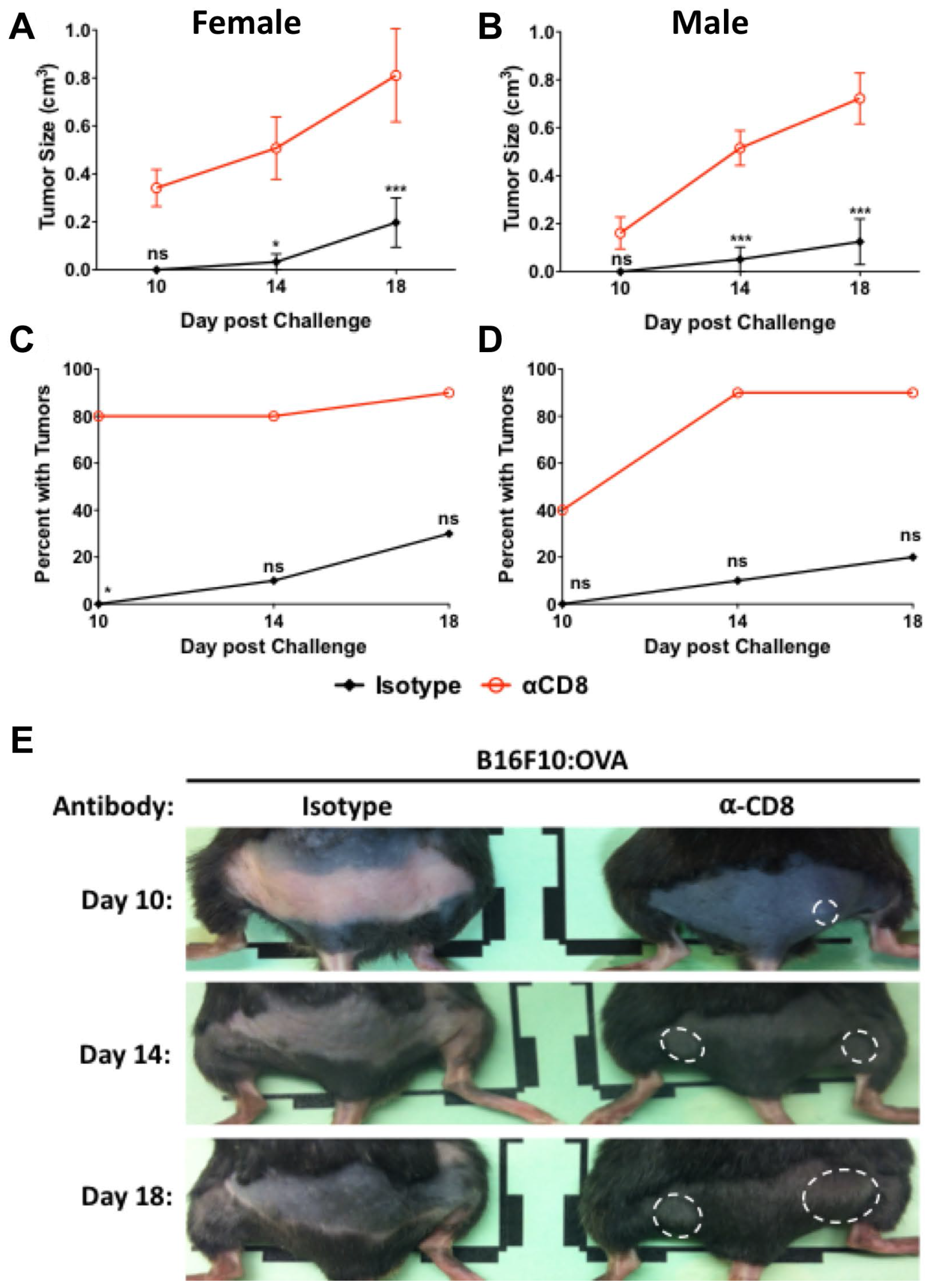 CD8+ cells provide protection 65 days after vaccination.