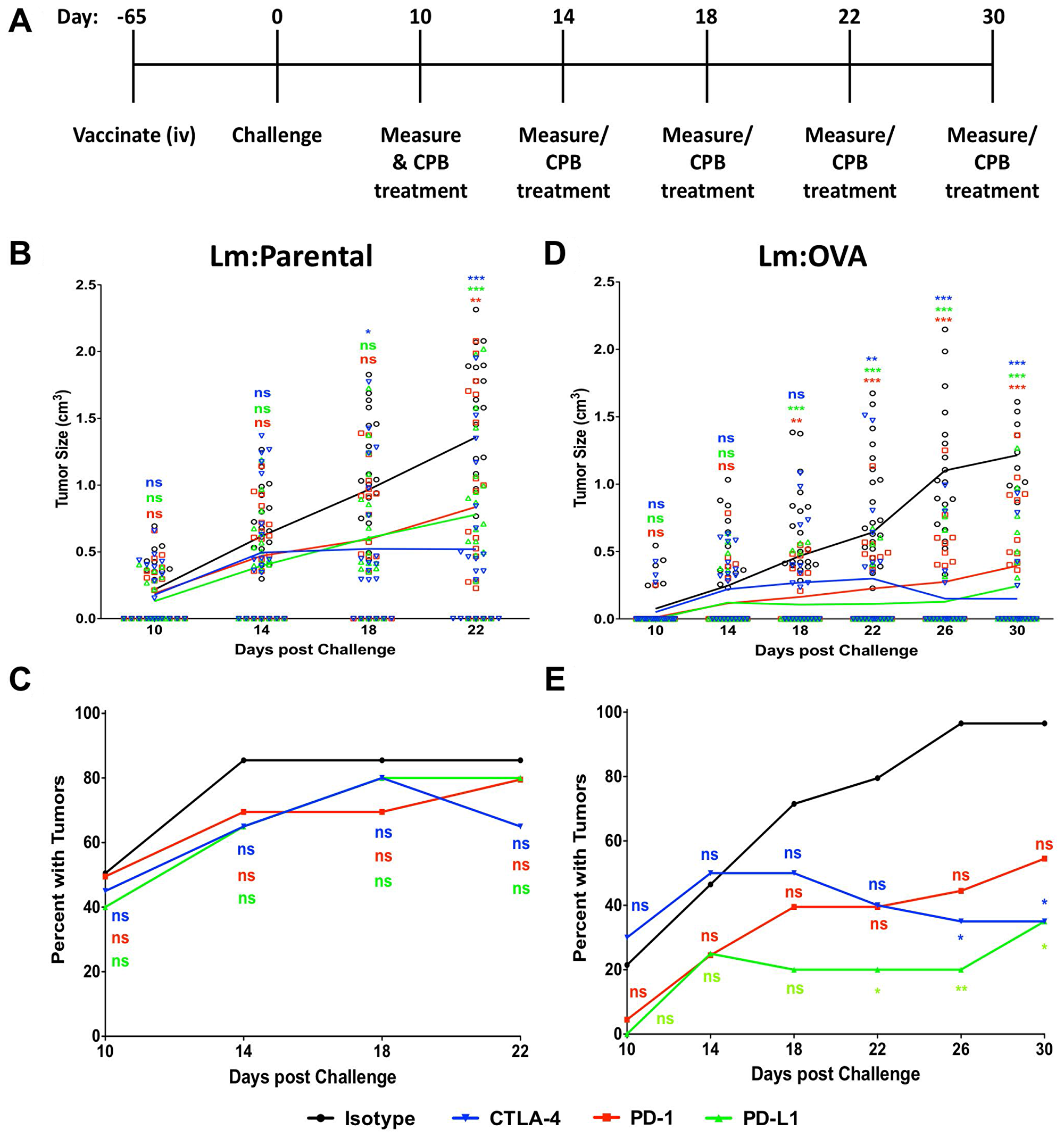 Checkpoint blockade treatment enhances Lm: OVA vaccination tumor prevention.