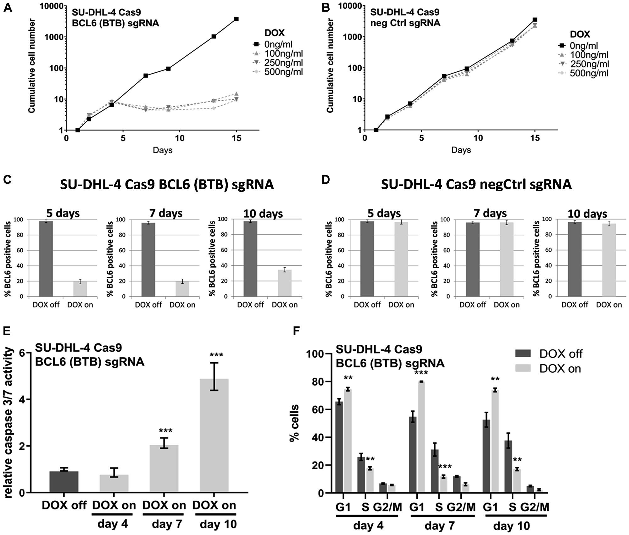 Conditional BCL6 knock-out in SU-DHL-4 in vitro induces anti-proliferative effects.