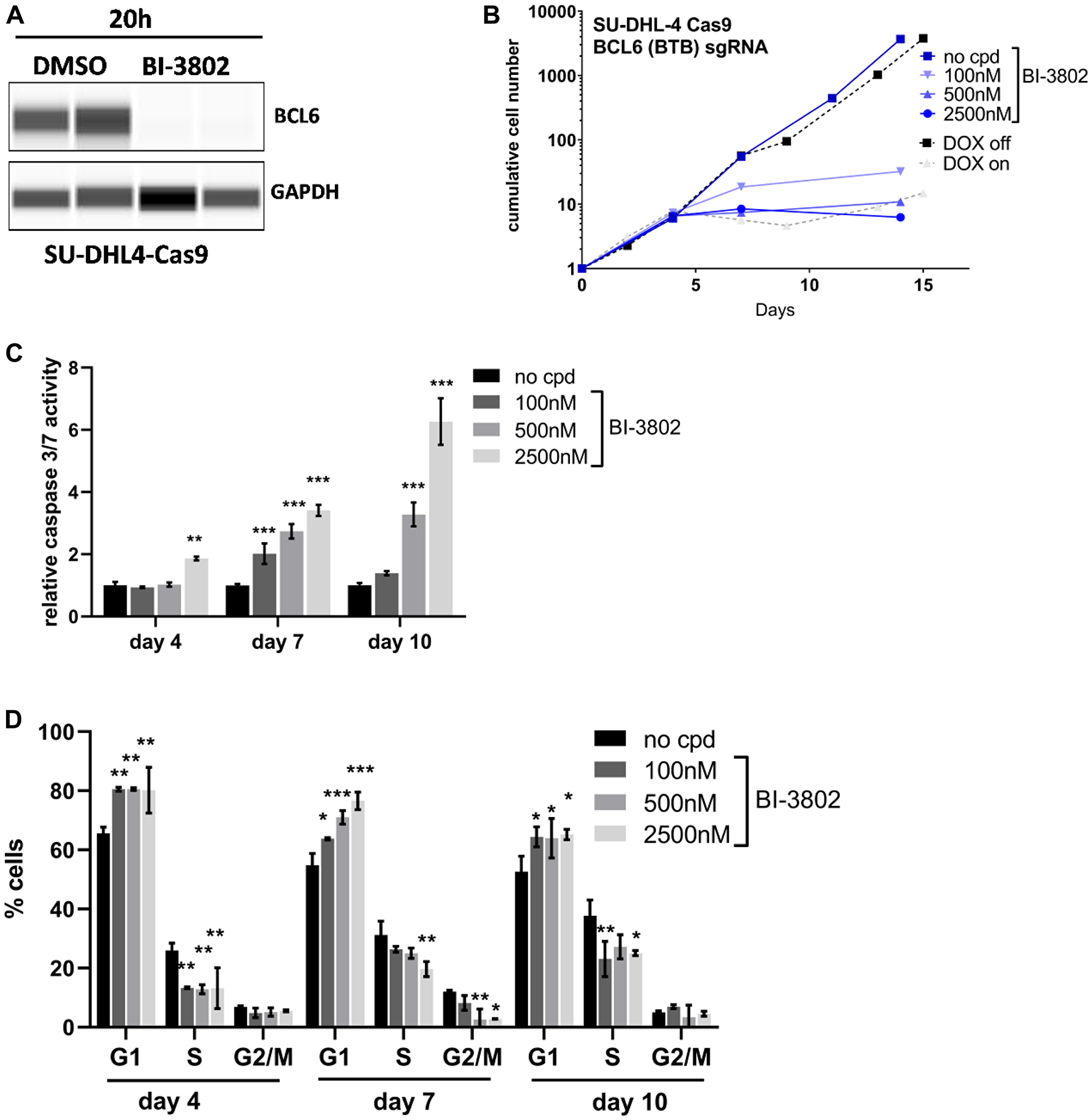 Comparable effects after BCL6 degradation and knock-out.