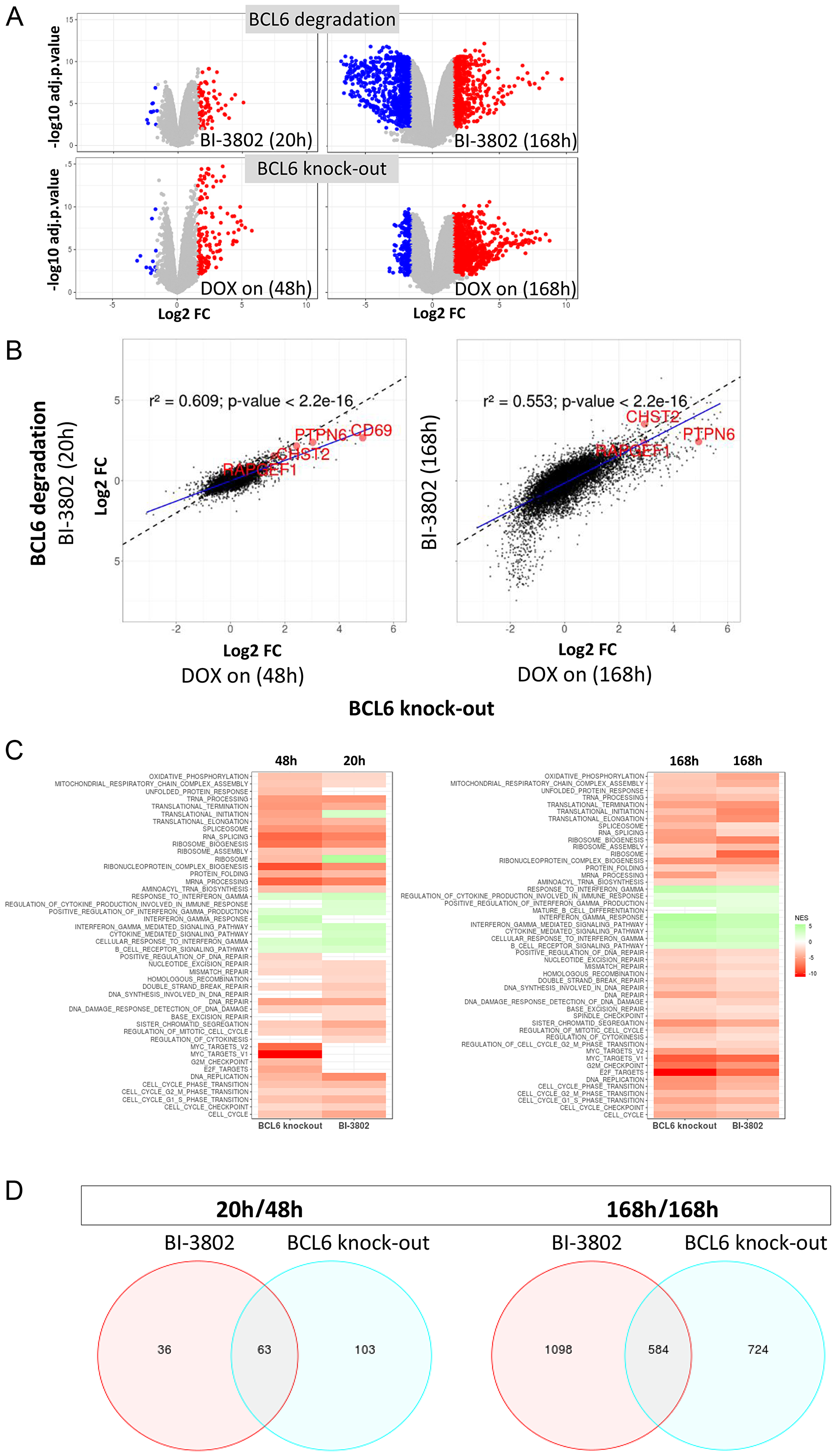 Conditional BCL6 knock-out in SU-DHL-4 induces gene perturbations similar to BCL6 degradation.