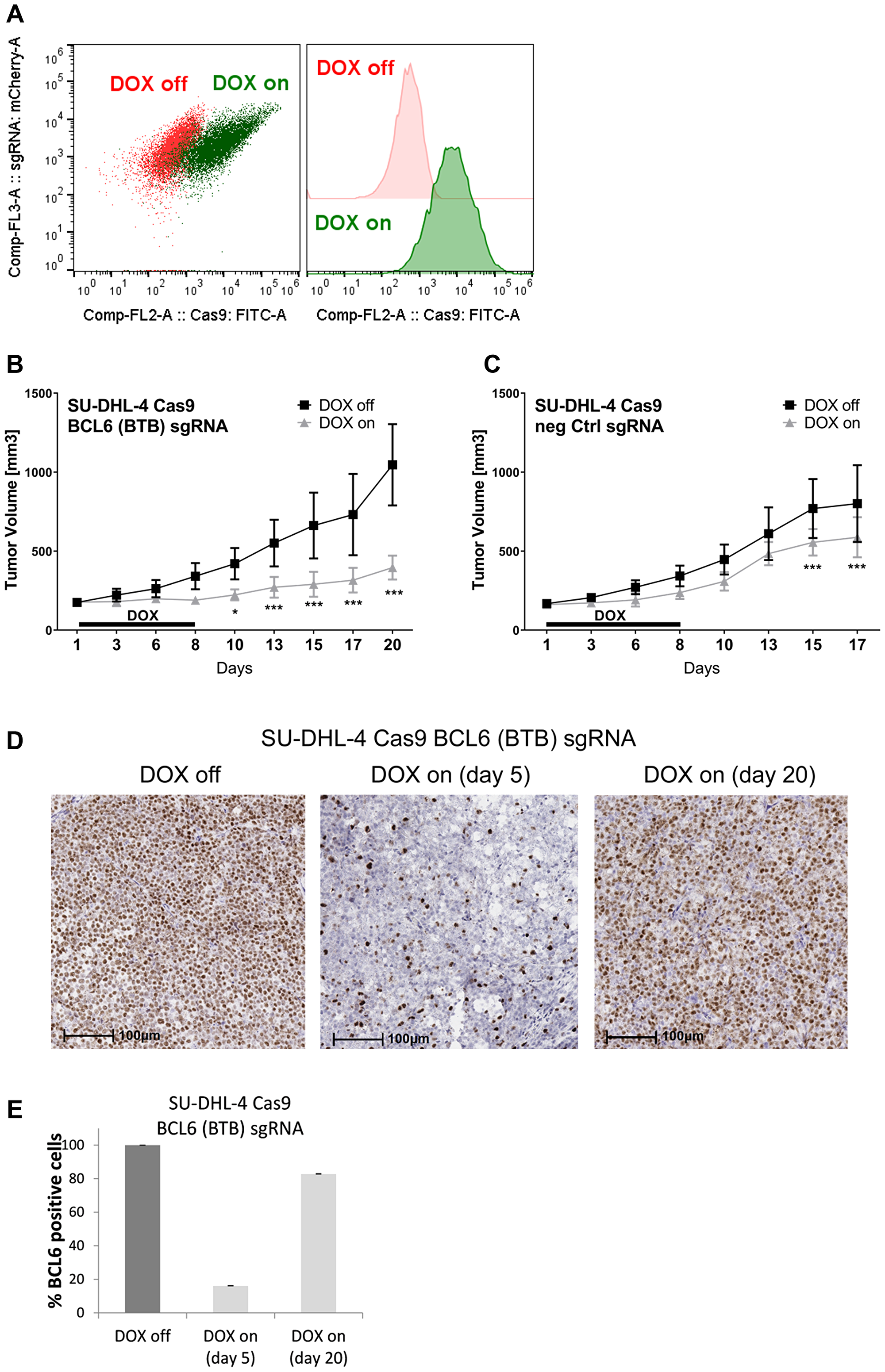 BCL6 knock-out in a DLBCL xenograft induces tumor stasis.