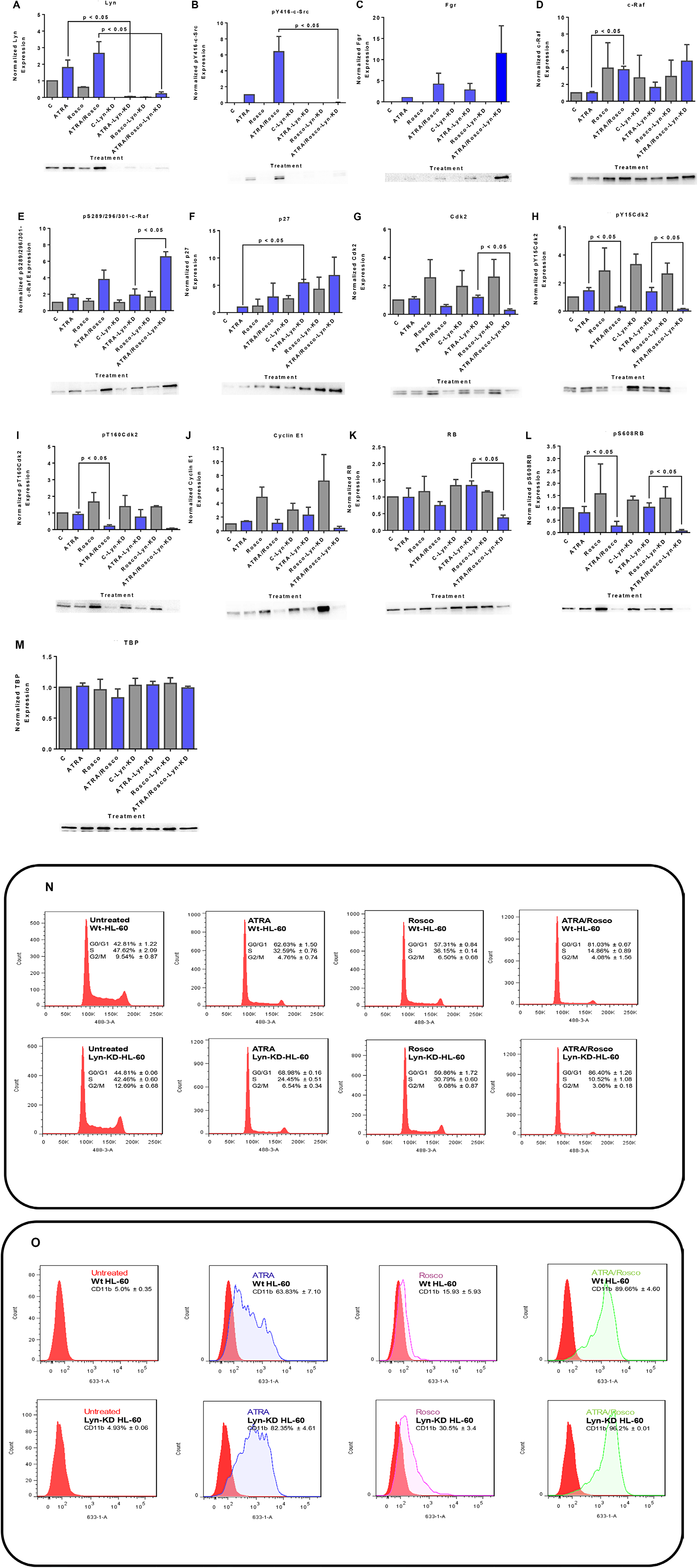 Western blots of nuclear lysate, CD11b and DNA histograms show that Lyn knockdown enhances ATRA-roscovitine induced gene expression and myeloid differentiation.