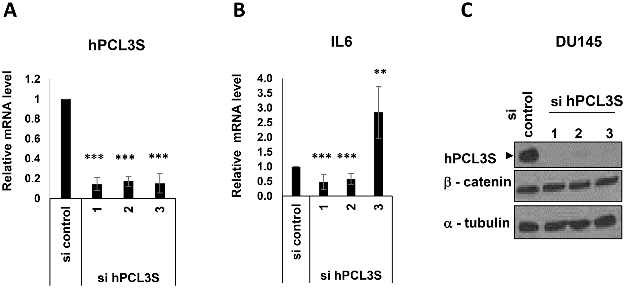 IL6 appeared as a hPCL3S target gene but independently of βcatenin stabilization in DU145 cells.