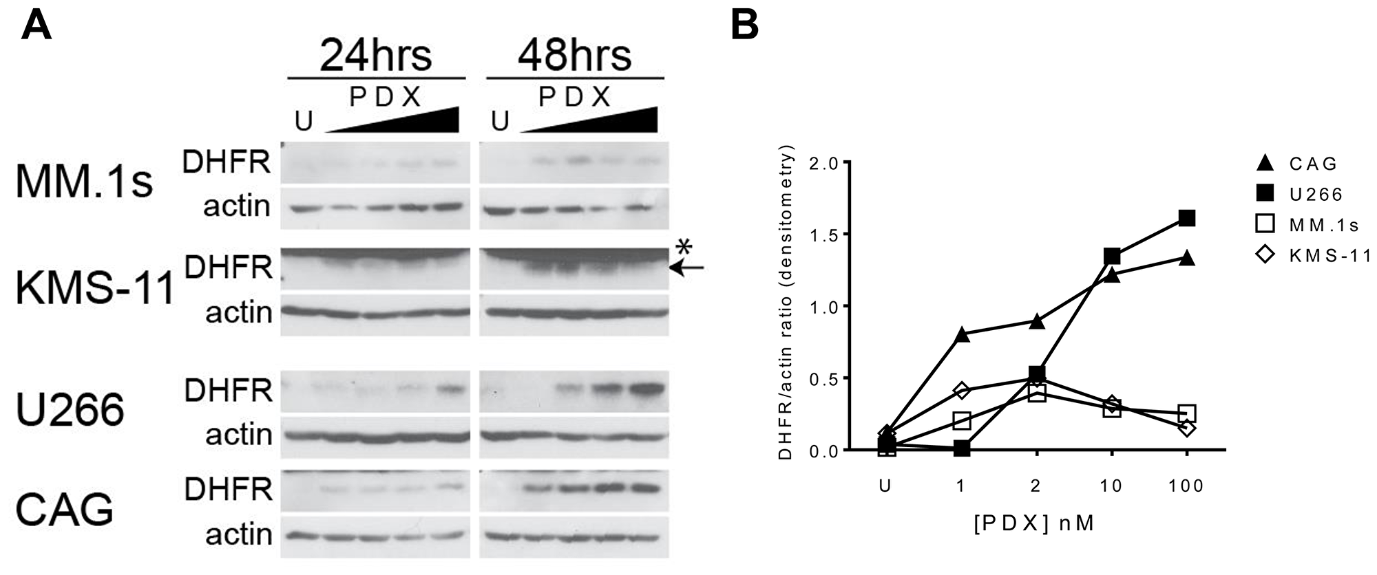 Antifolate-resistance in HMCLs correlates to the magnitude of DHFR protein upregulation in response to PDX.
