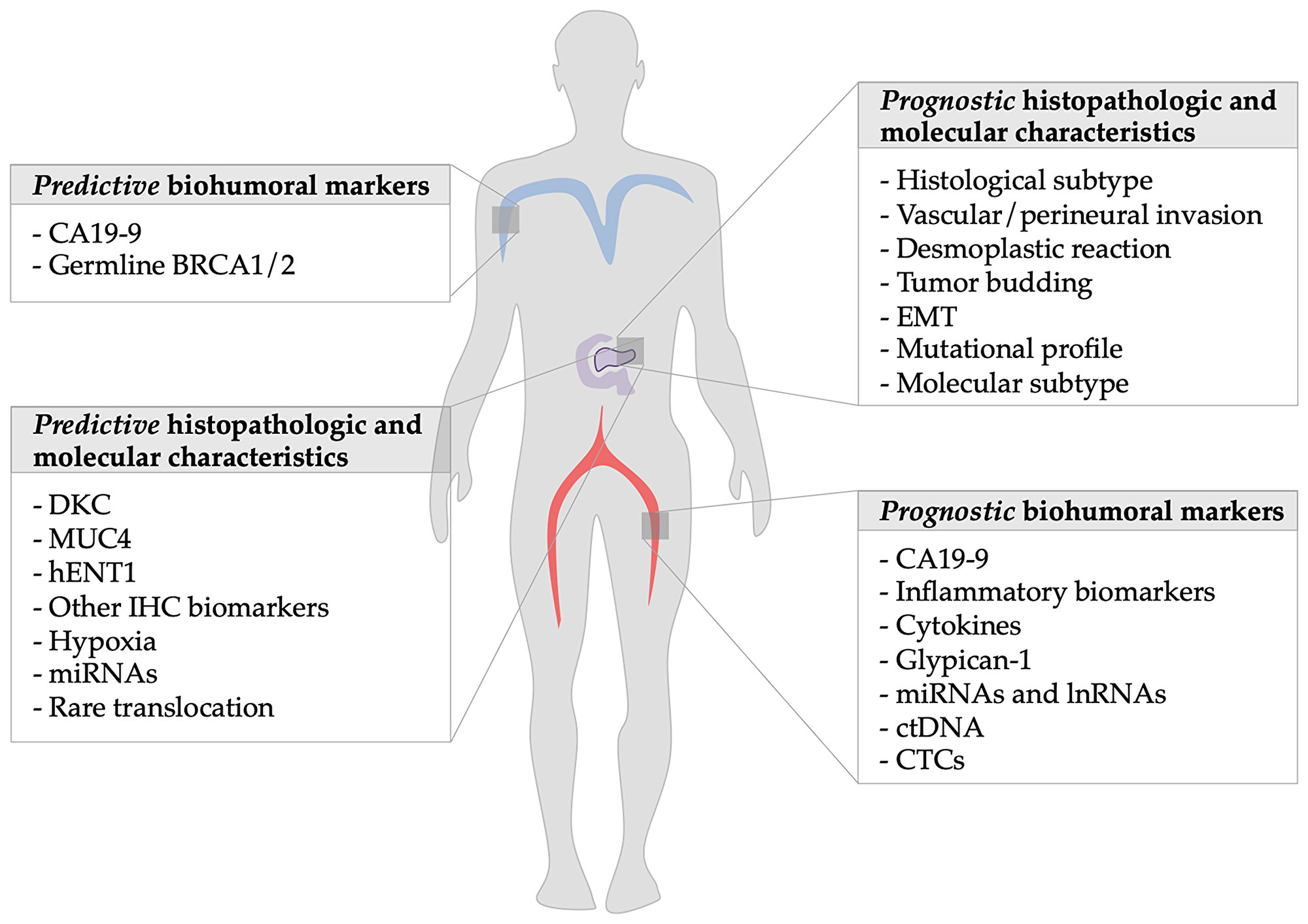 Summary of prognostic factors of metastatic pancreatic ductal adenocarcinoma: The figure shows on the left side the predictive markers discussed in the article and on the right the prognostic ones.