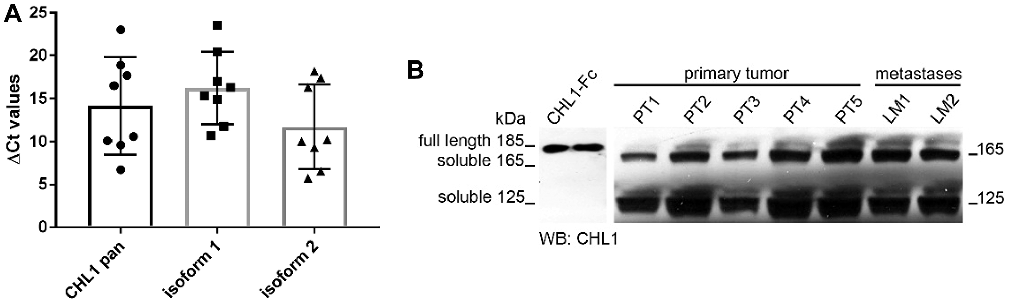 CHL1 expression analysis in GIST.