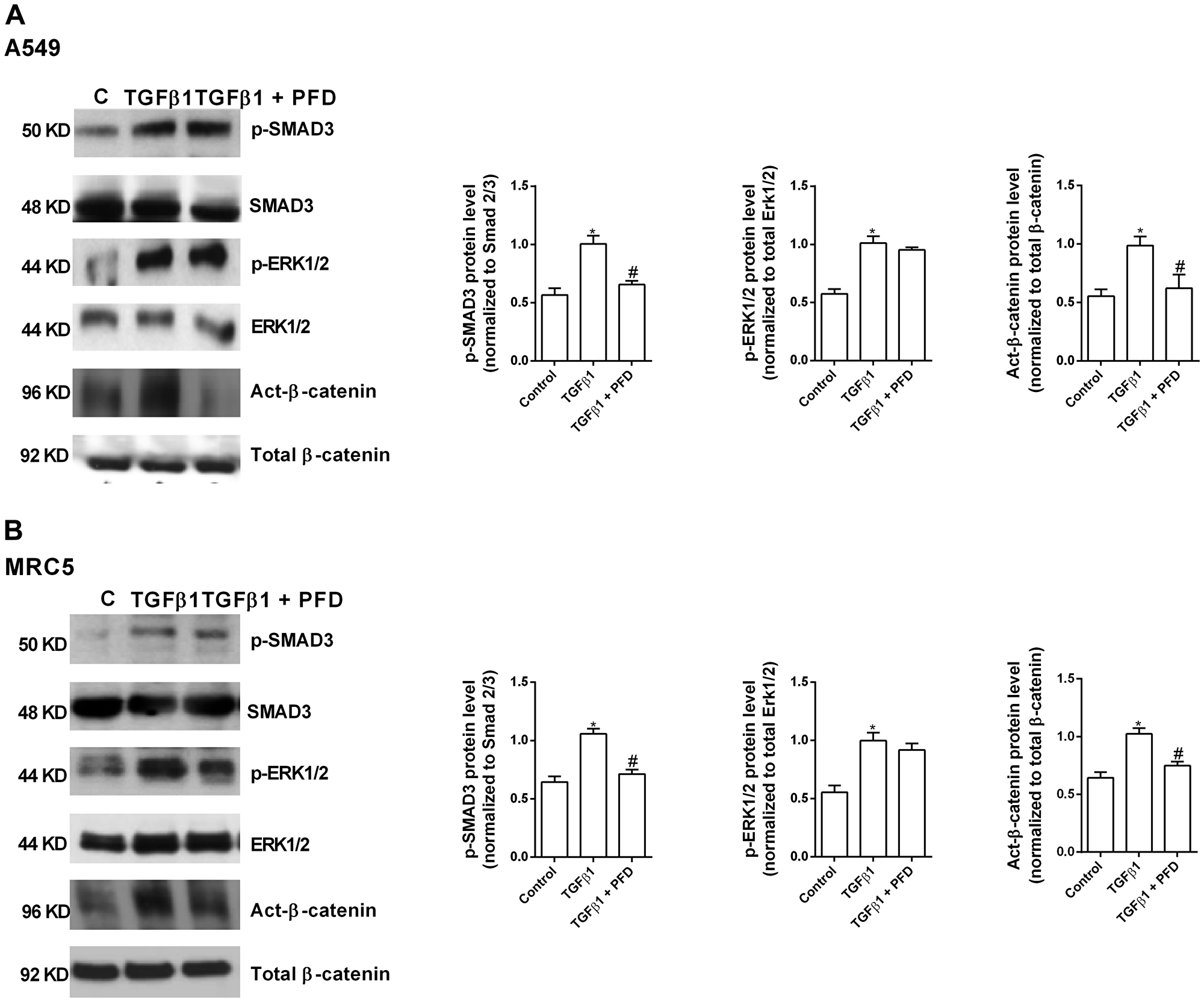 Pirfenidone (PFD) inhibits the TGF-β1-induced β-catenin activation but not the SMAD3 and ERK1/2 phosphorylation.