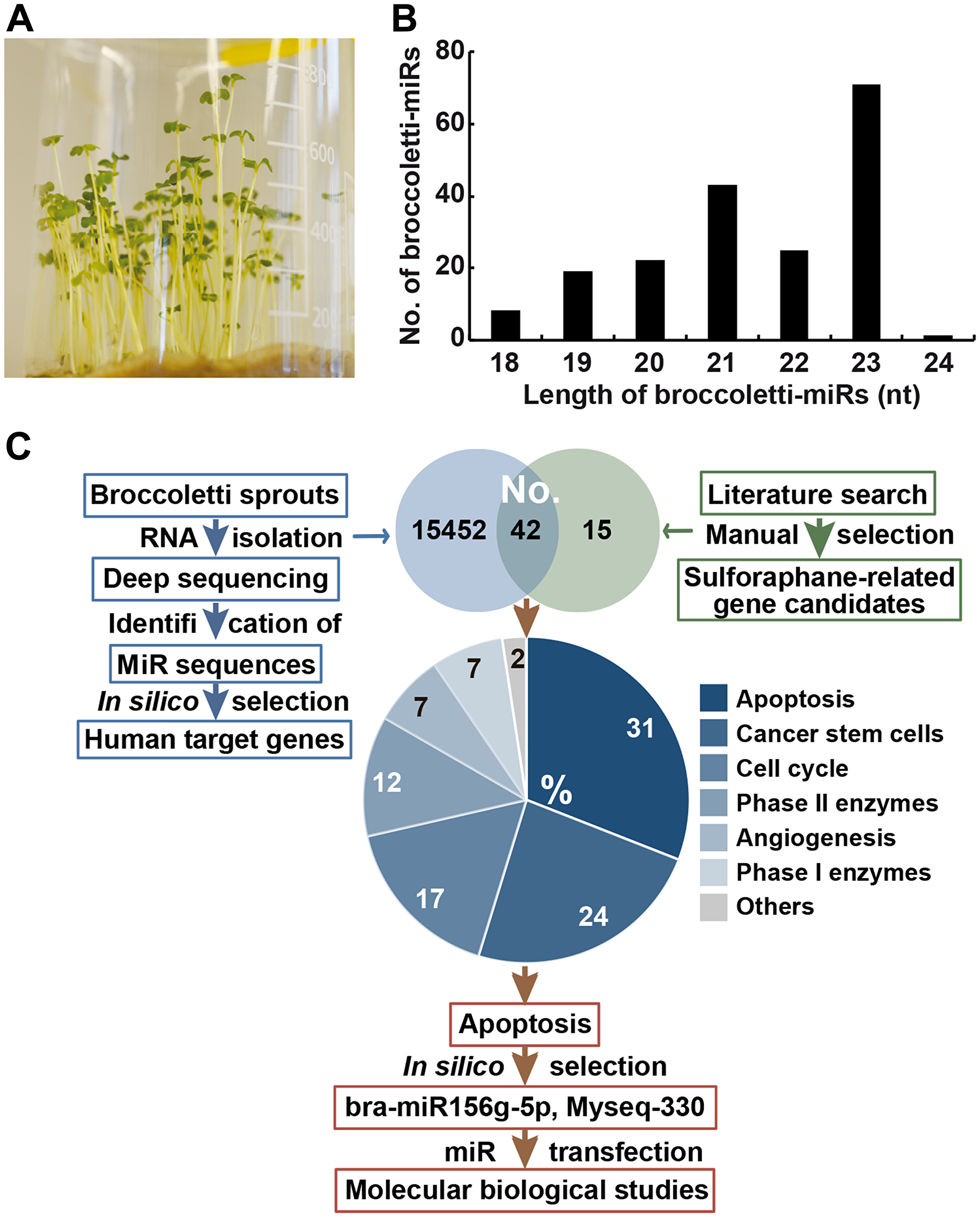 Identification of 747 miR sequences in broccoletti sprouts.