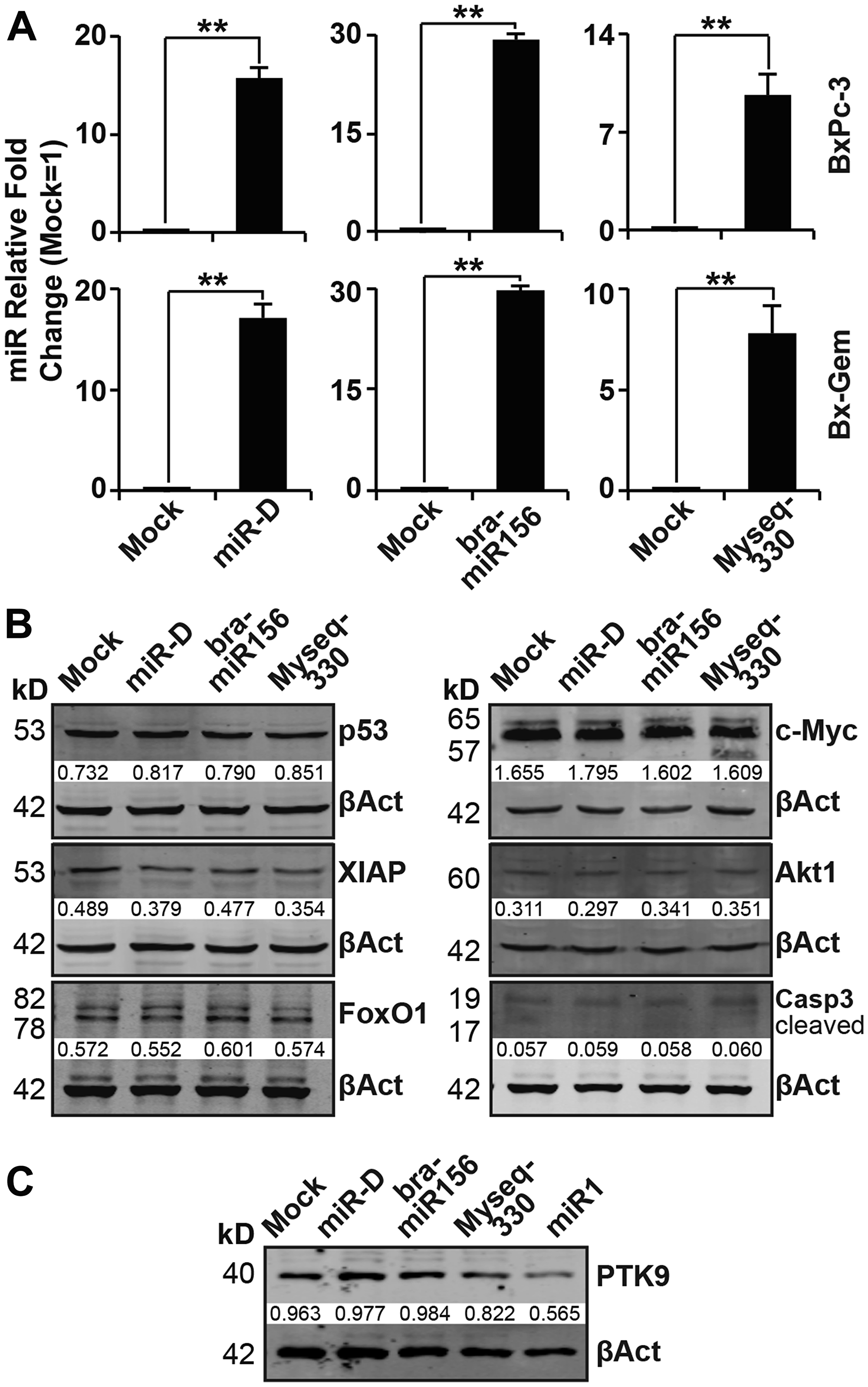 Lipofection of broccoletti-miRs in PDA cells does not induce the expression of target genes.