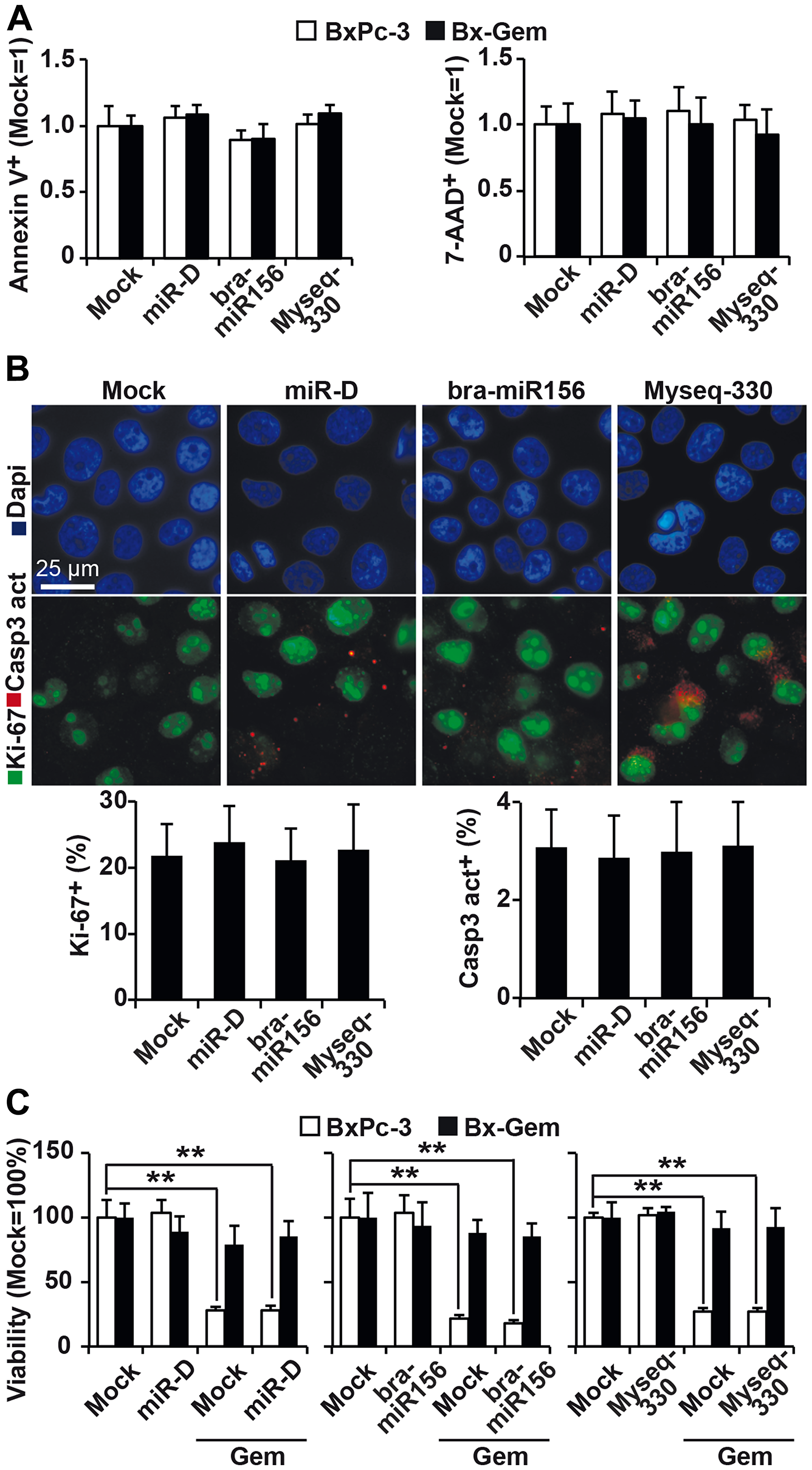 Lipofection of top broccoletti-miR candidates does not influence basal and induced apoptosis.
