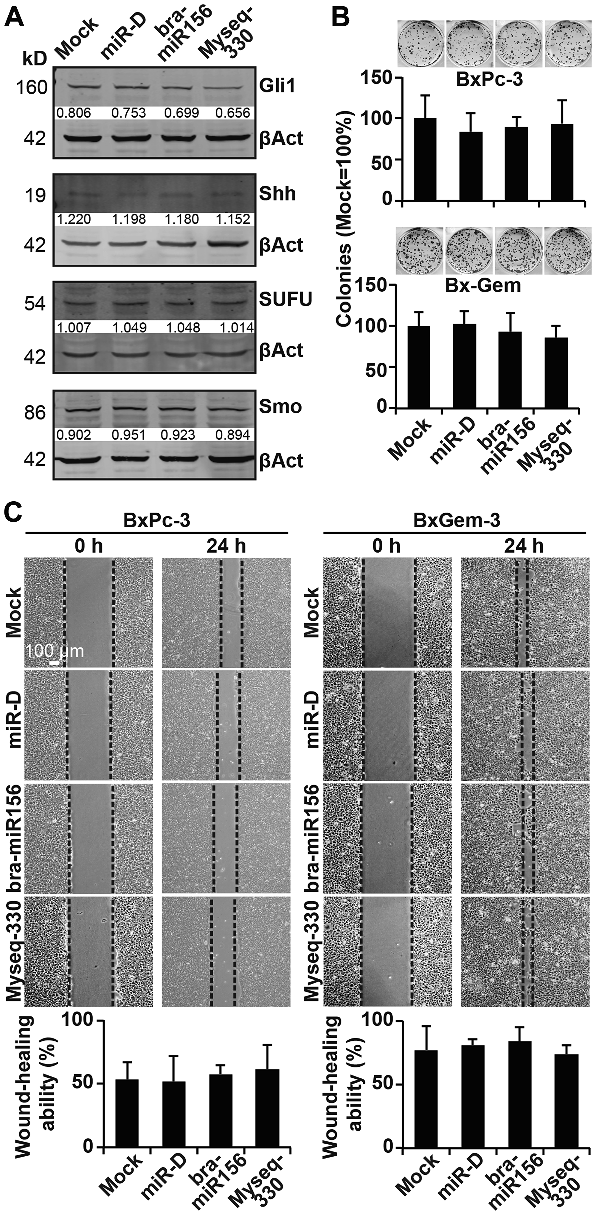 Lipofection of the top broccoletti-miR candidates does not affect clonogenicity and migration.