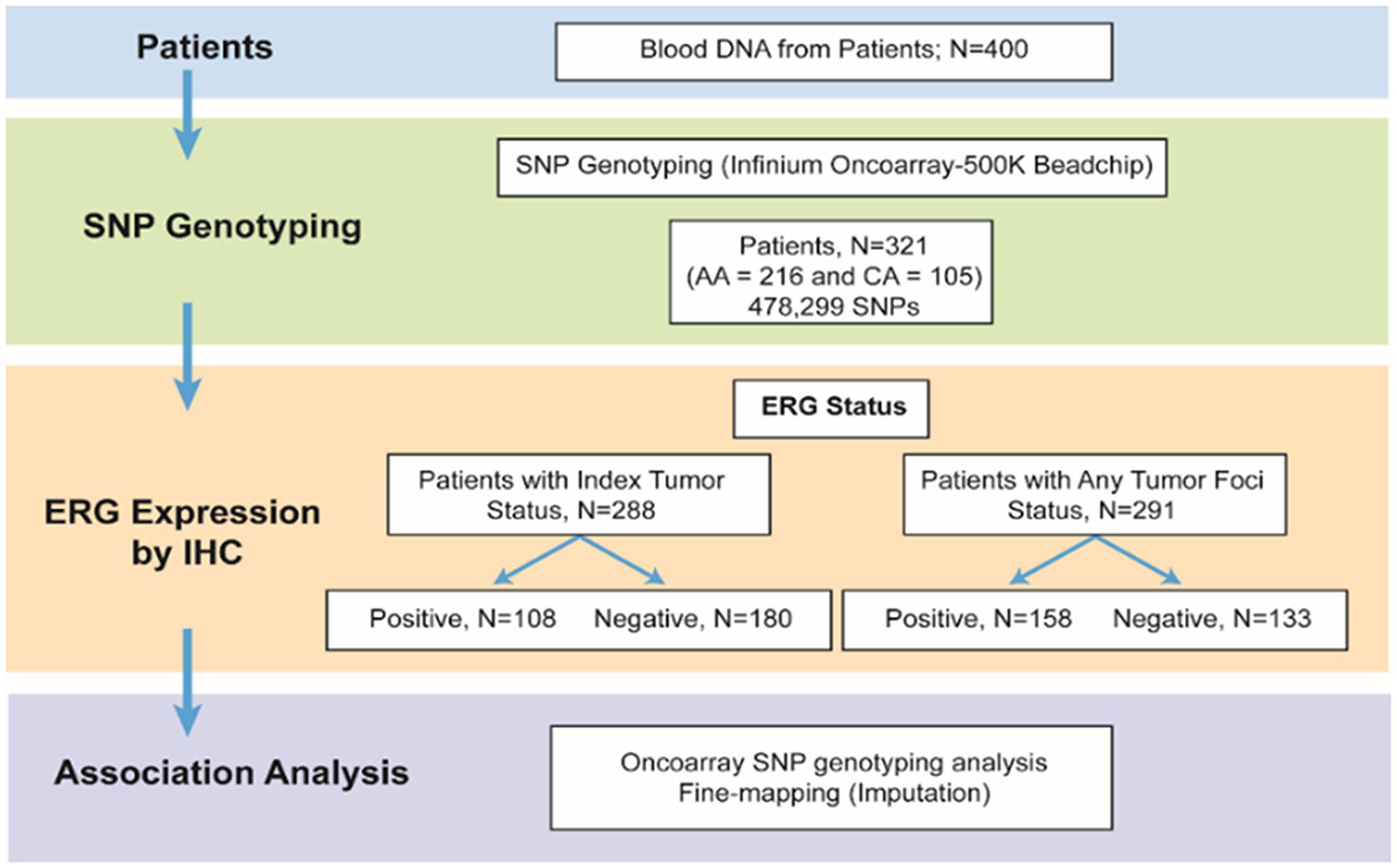 Schematic representation of the study.