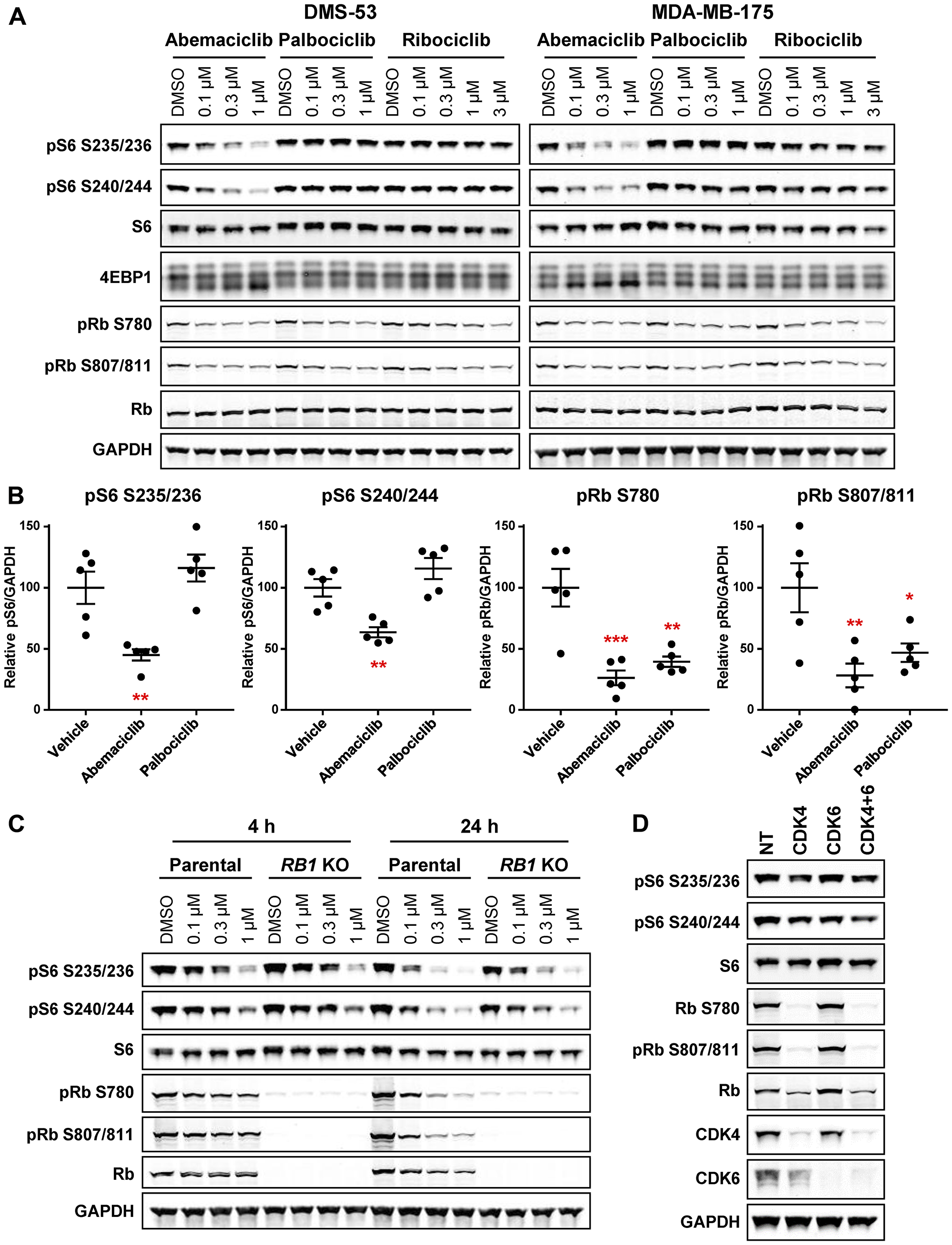 Abemaciclib inhibits S6 phosphorylation independent of effects on CDK4/6 and Rb.