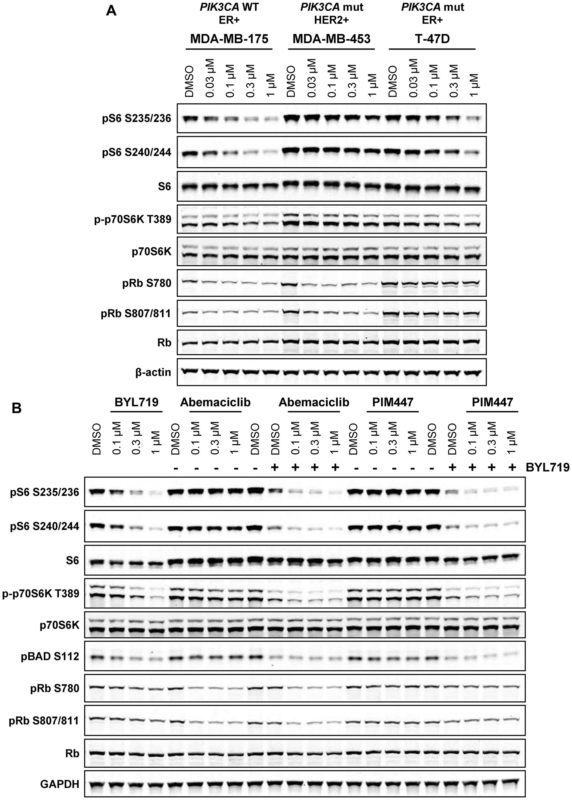 PI3K activity compensates for PIM inhibition in PIK3CA mutant breast cancer.