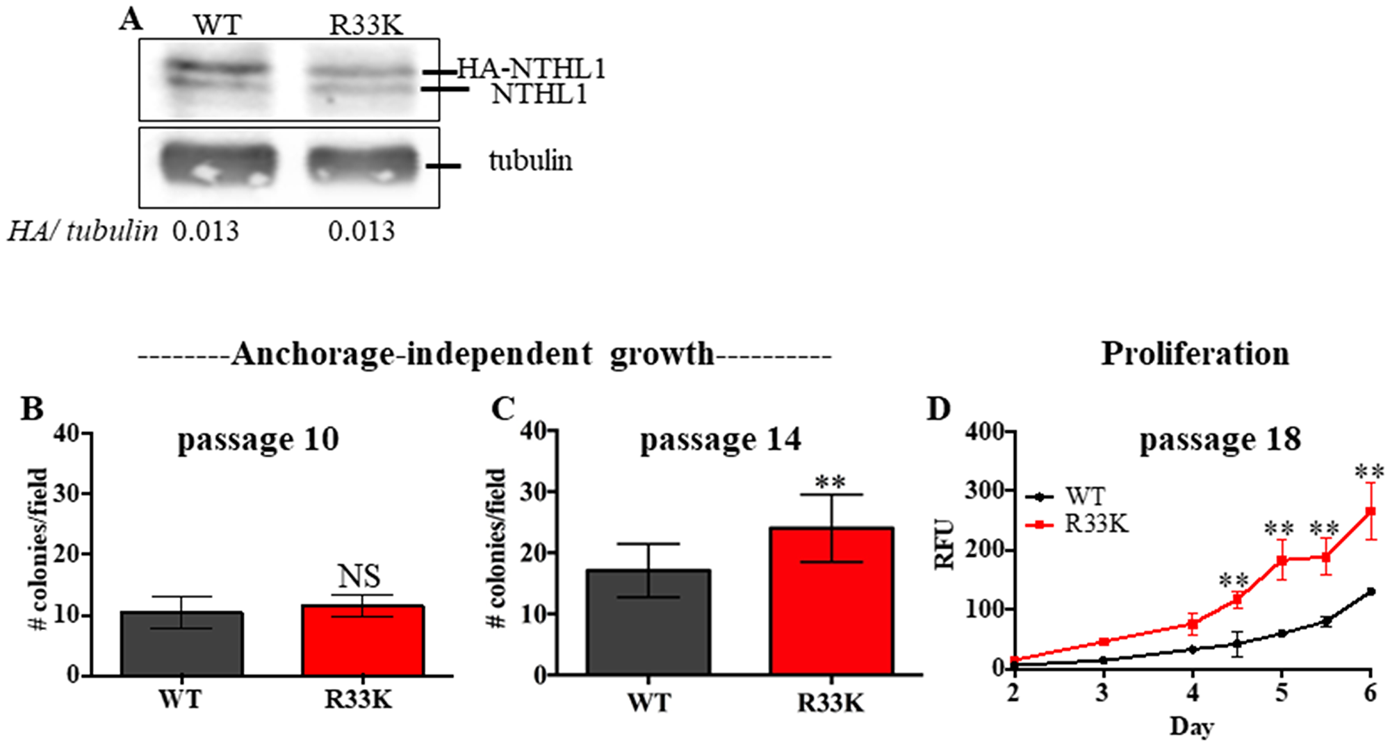 Expression of R33K-NTHL1 induces cellular transformation.