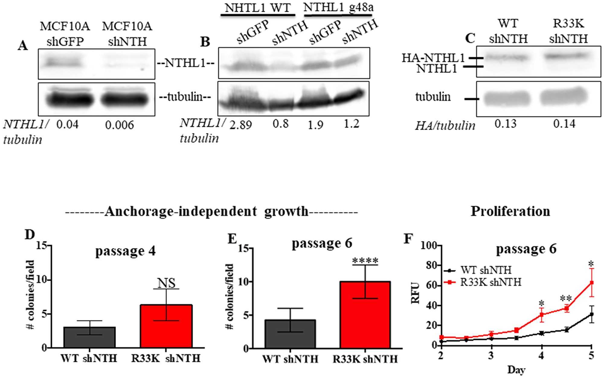 Expression of R33K-NTHL1 with knockdown of endogenous NTHL1 accelerates cellular transformation.