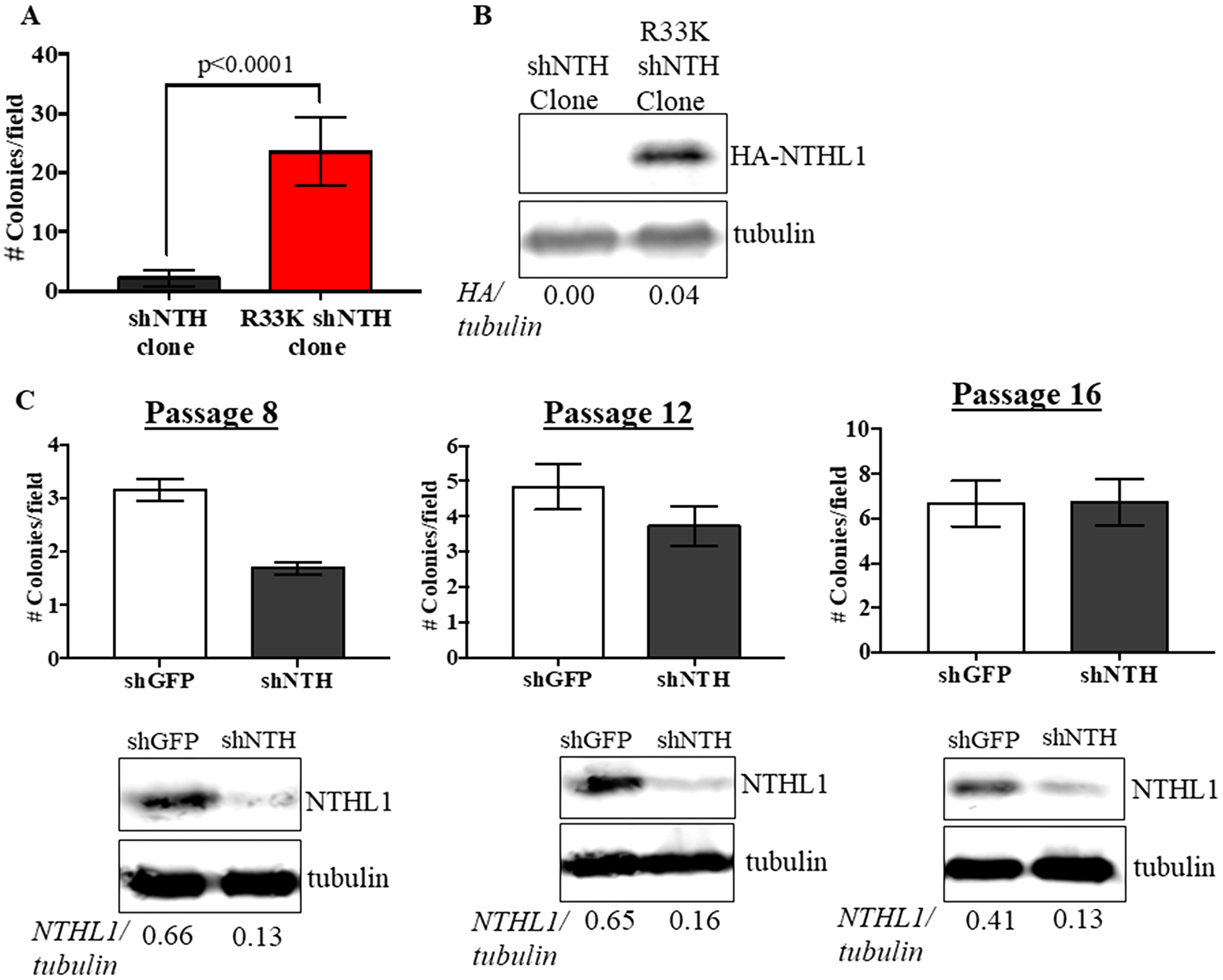 Expression of R33K-NTHL1 is required for cellular transformation.