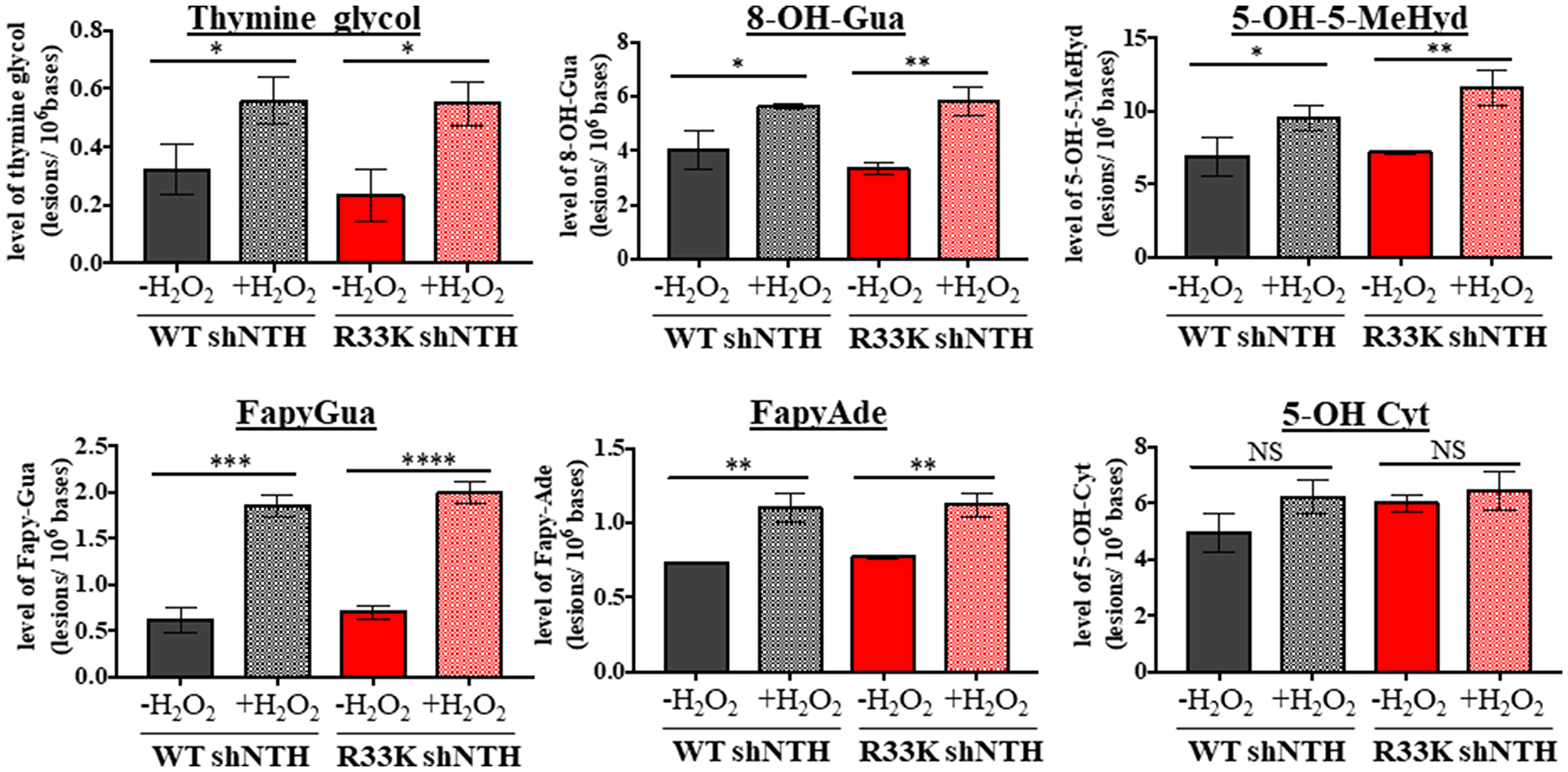 Wt- and R33K-NTHL1 exhibit similar substrate specificity and repair kinetics in vivo.