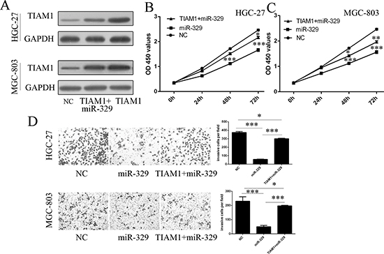 miR-329 regulated cell proliferation and invasion through inhibiting TIAM1.