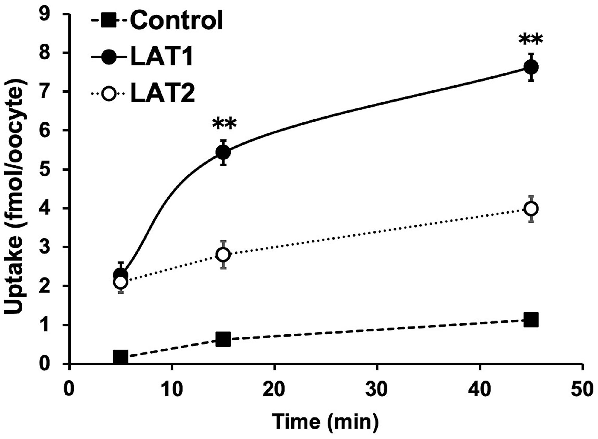 Analysis of para-211At-phenylalanine (PA) transport by L-type amino acid transporter-1 (LAT1) and LAT2.