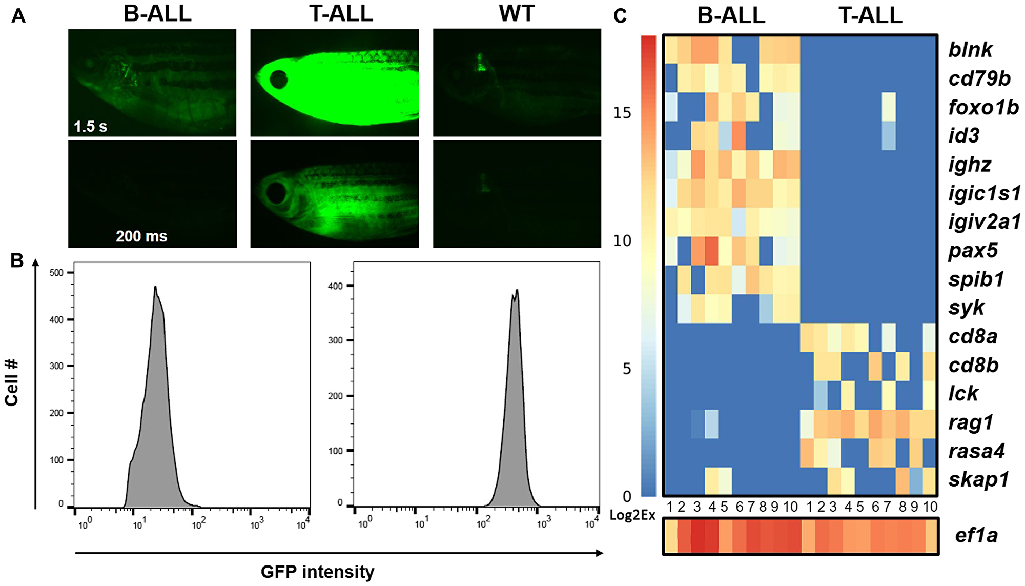 Gene expression in individual hMYC B- and T-ALL cells.
