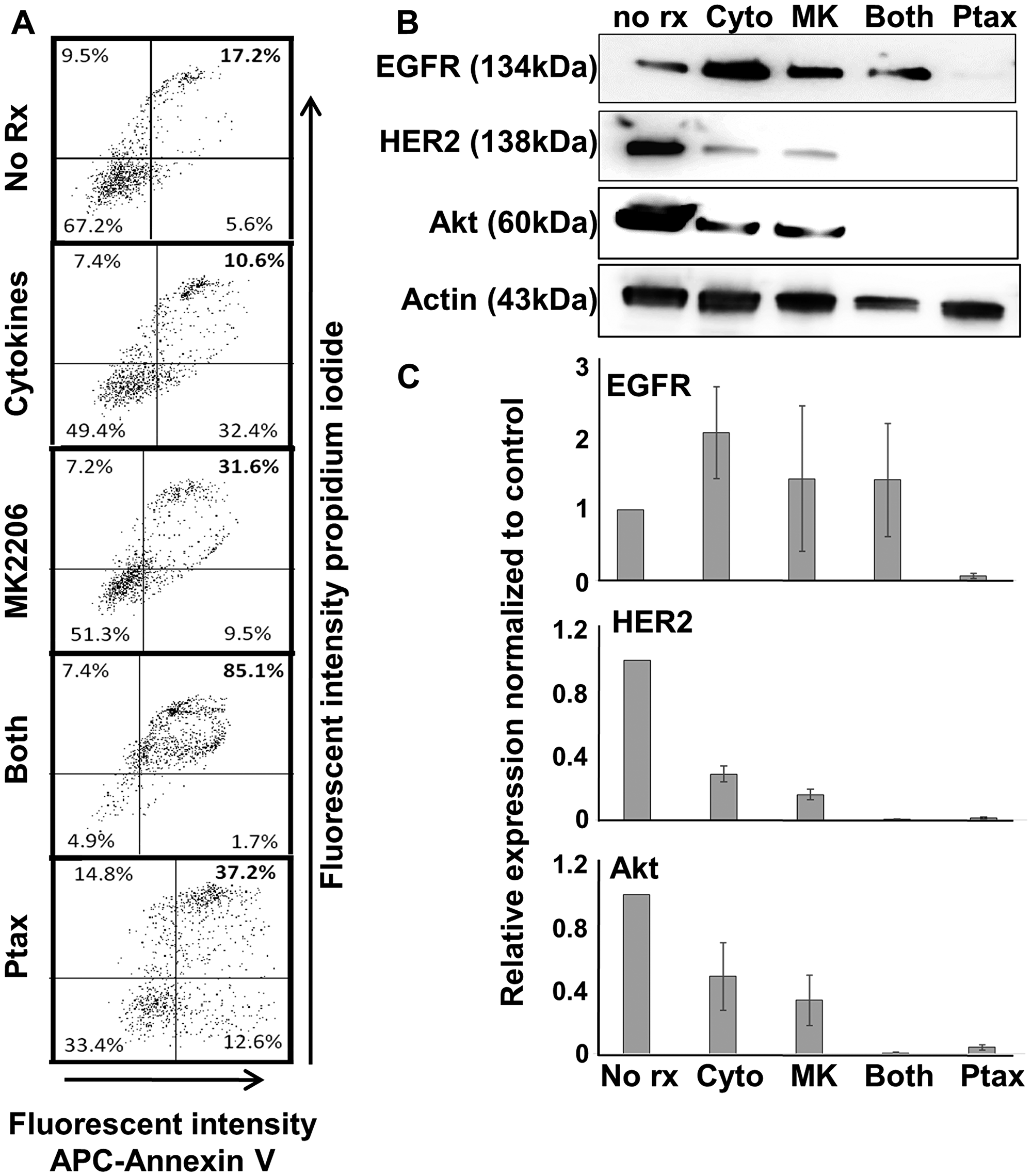 Th1 cytokines, MK-2206, and paclitaxel induce apoptosis in human breast cancer cells but differentially affect expression of oncodrivers.