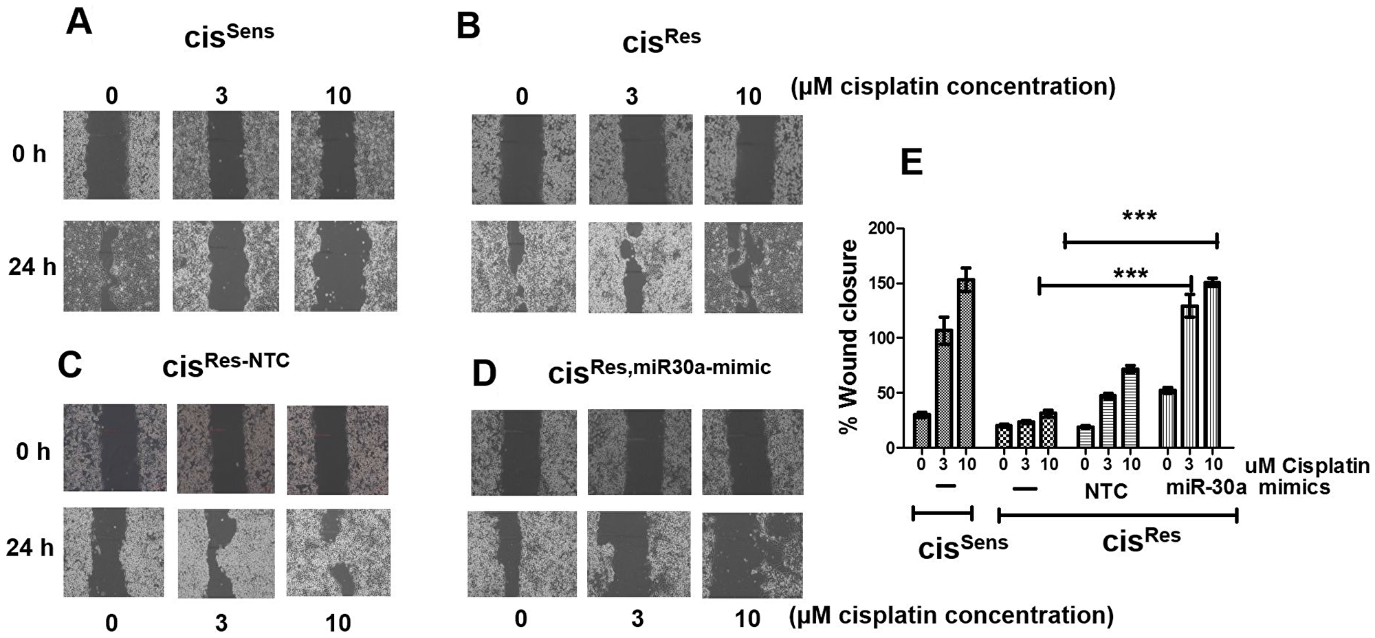 The effects of cisplatin treatment were analyzed on the migration of cisRes oral cancer cells transfected with either miR-30a mimics or NC (non-target control) by wound assay.