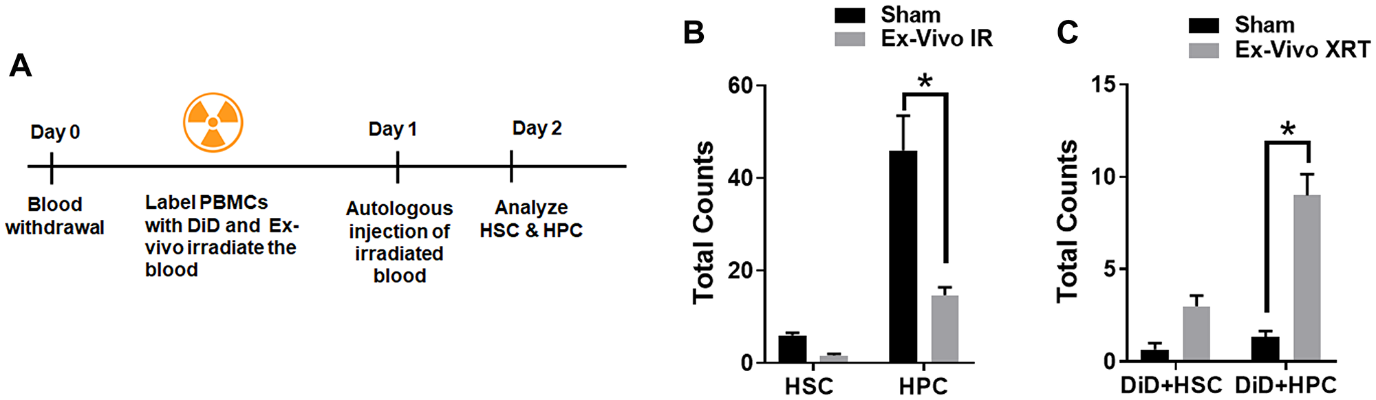Ex-vivo irradiated PBCs traffic to the bone marrow.
