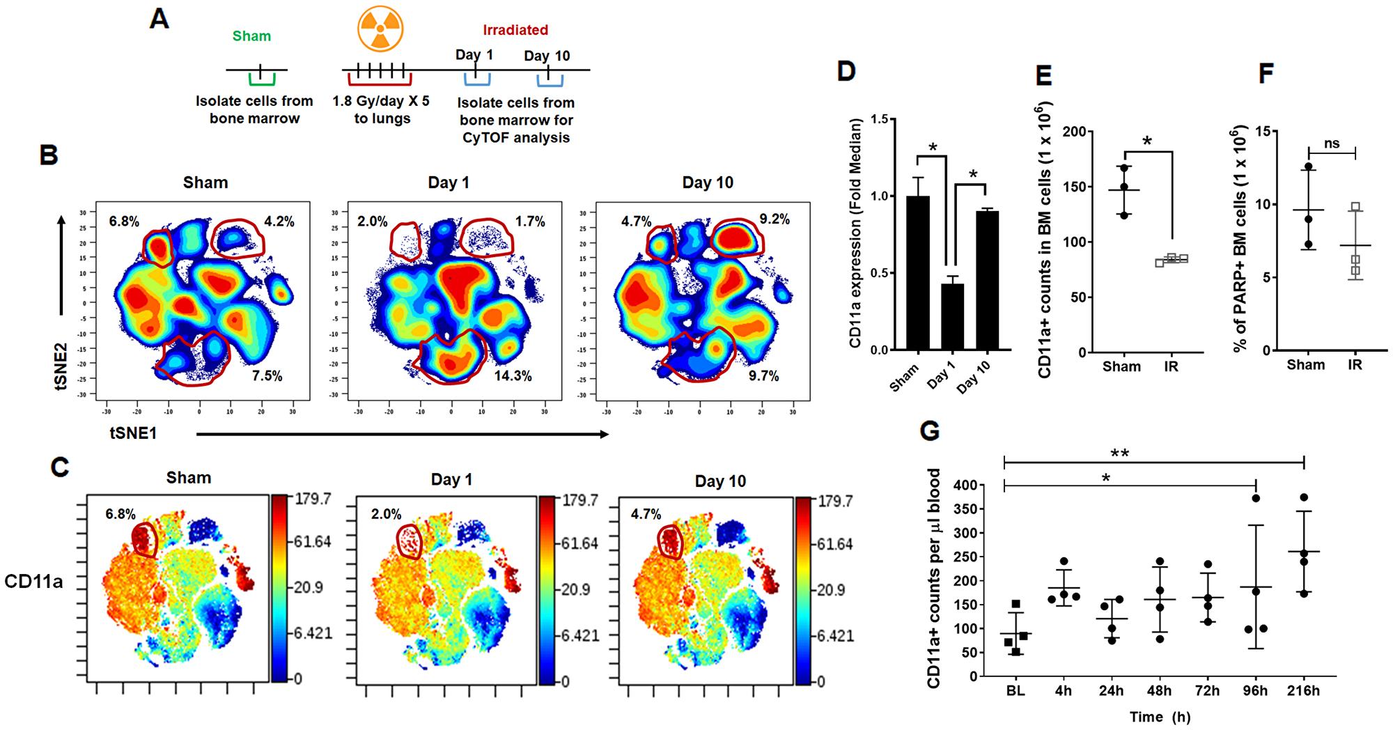 CyTOF analysis of bone marrow cells following irradiation.