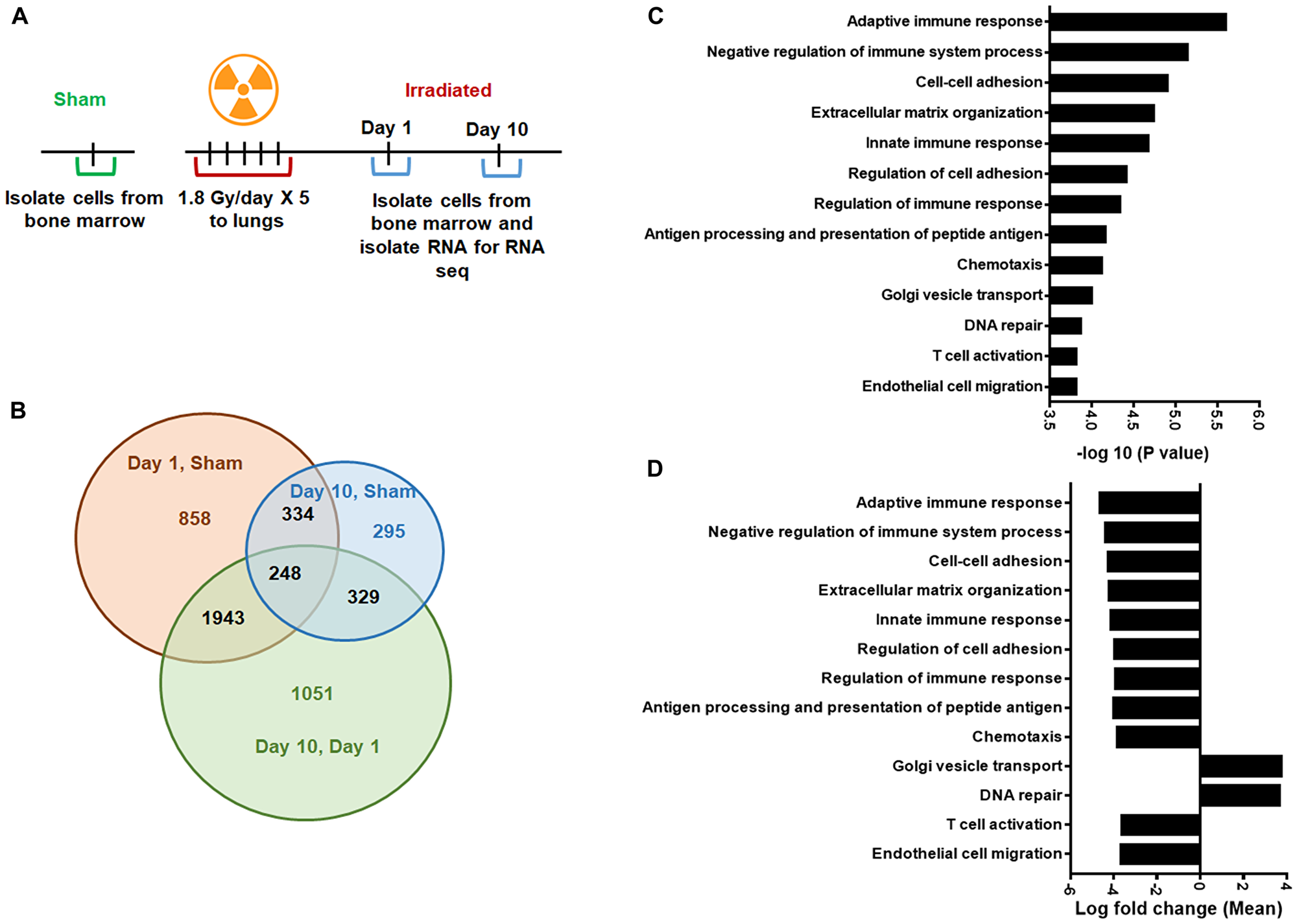 Gene Ontology (GO) analysis to identify differentially regulated genes.