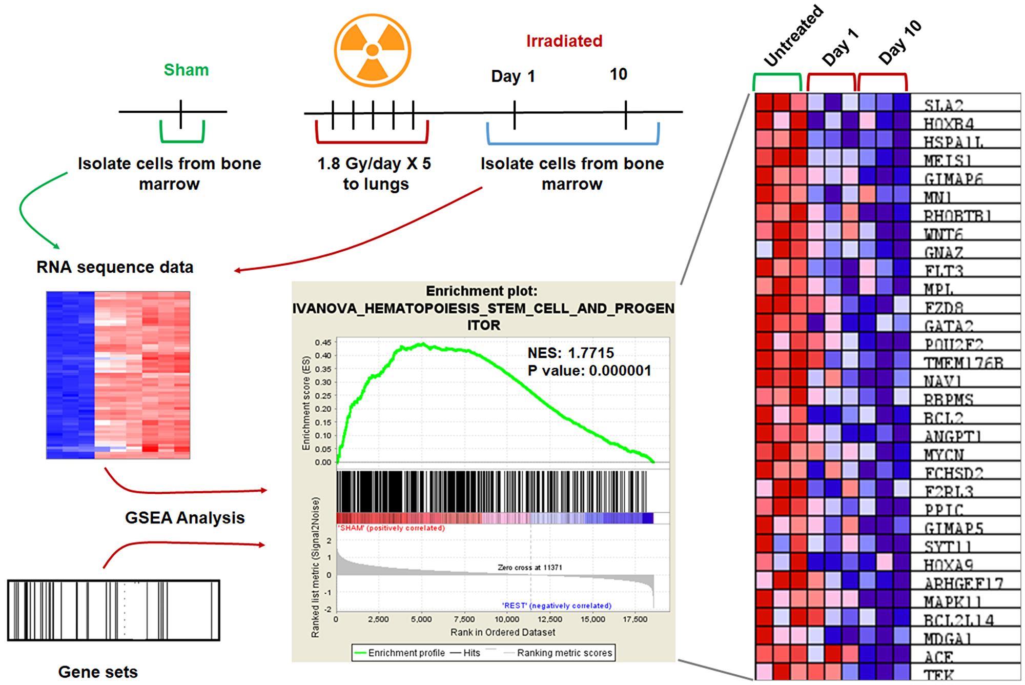 GSEA analysis revealed downregulation of genes involved in hematopoiesis.