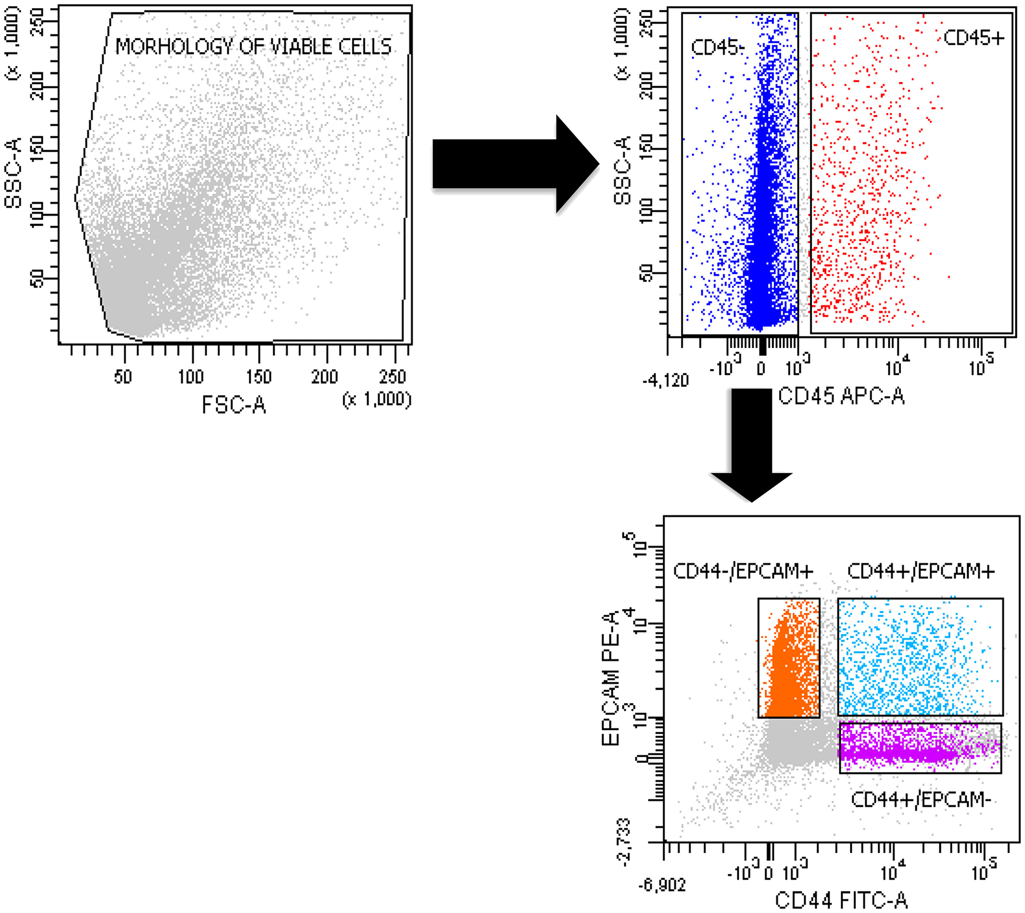 Sorting of double-positive CD44+/EPCAM+ and negative CD44+/EPCAM– and CD44–/EPCAM+ cells.