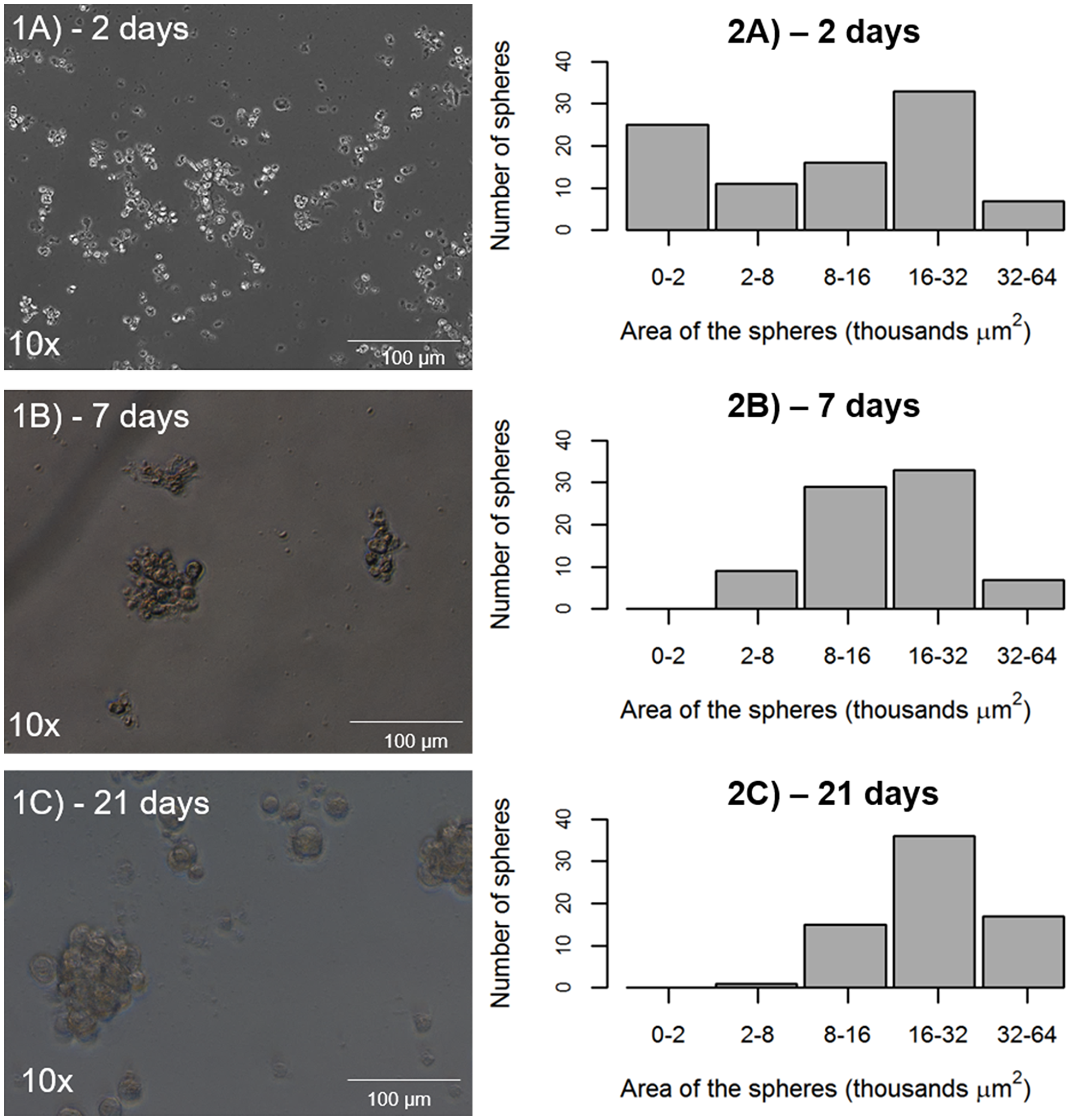 Potential of tumor sphere formation by CD44+/EPCAM+ sorted cells.
