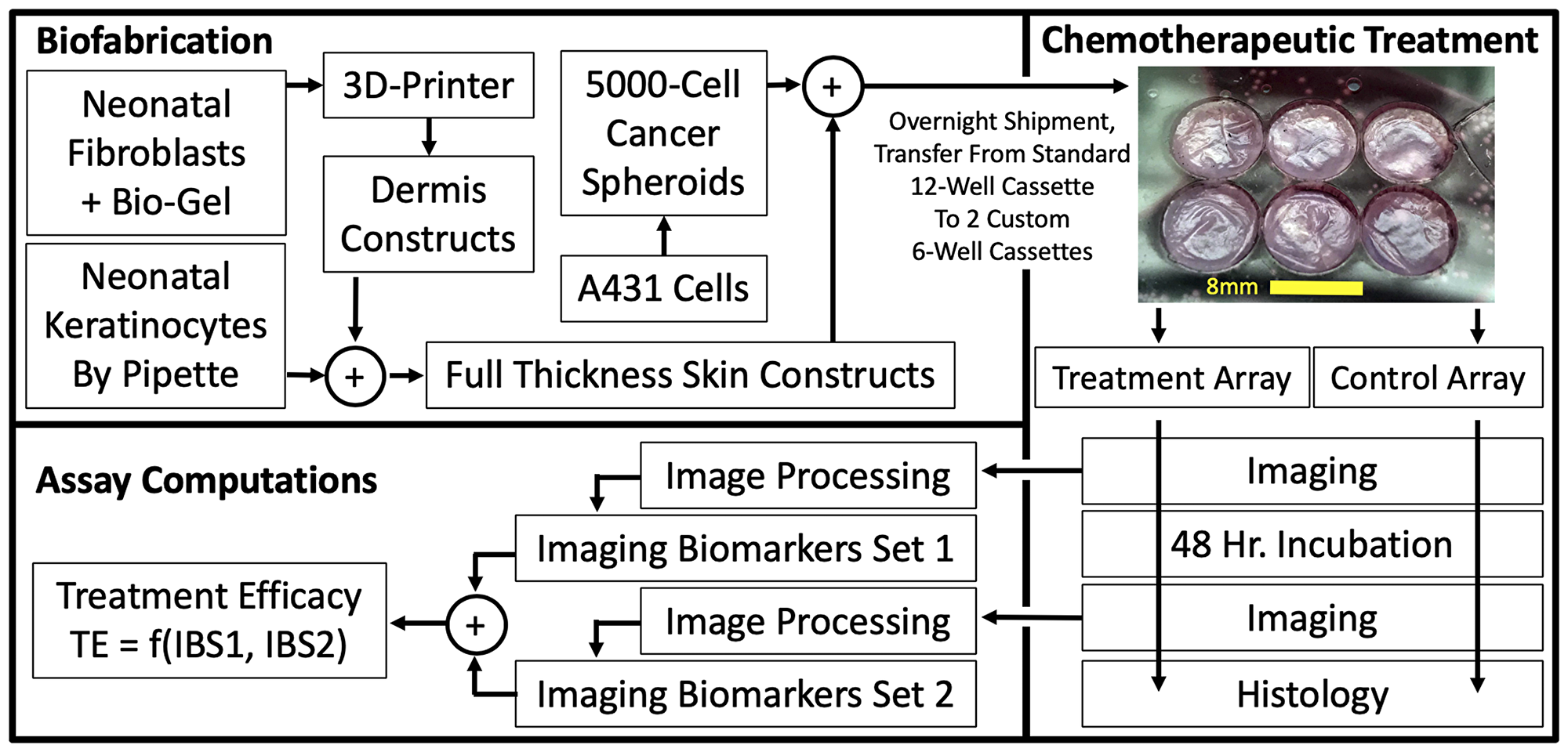 3D, Biofabricated tissue model system and chemotherapeutic assay using multi-channel confocal microscopy imaging biomarkers.