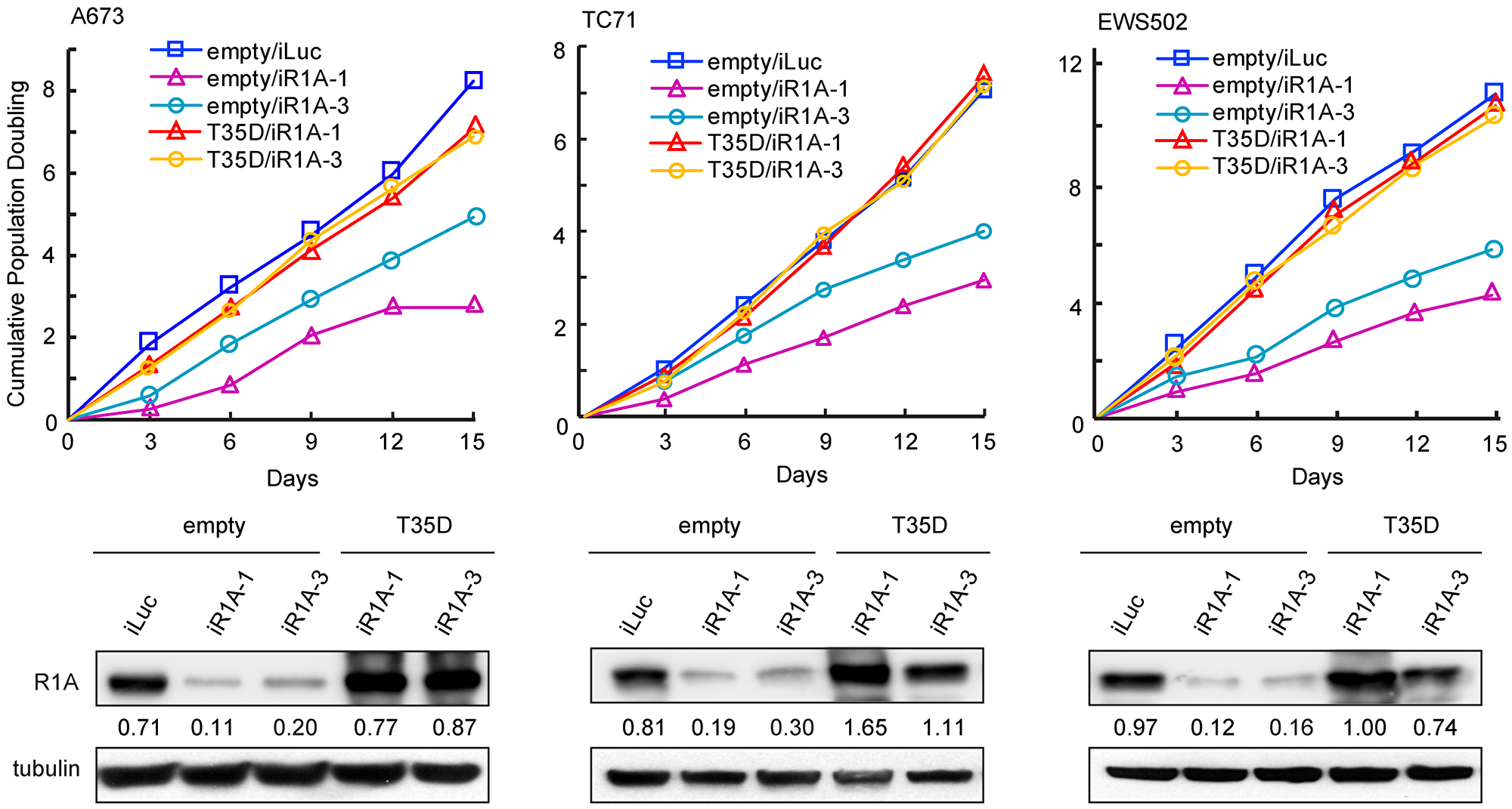 Depletion of PPP1R1A inhibits ES cell proliferation.