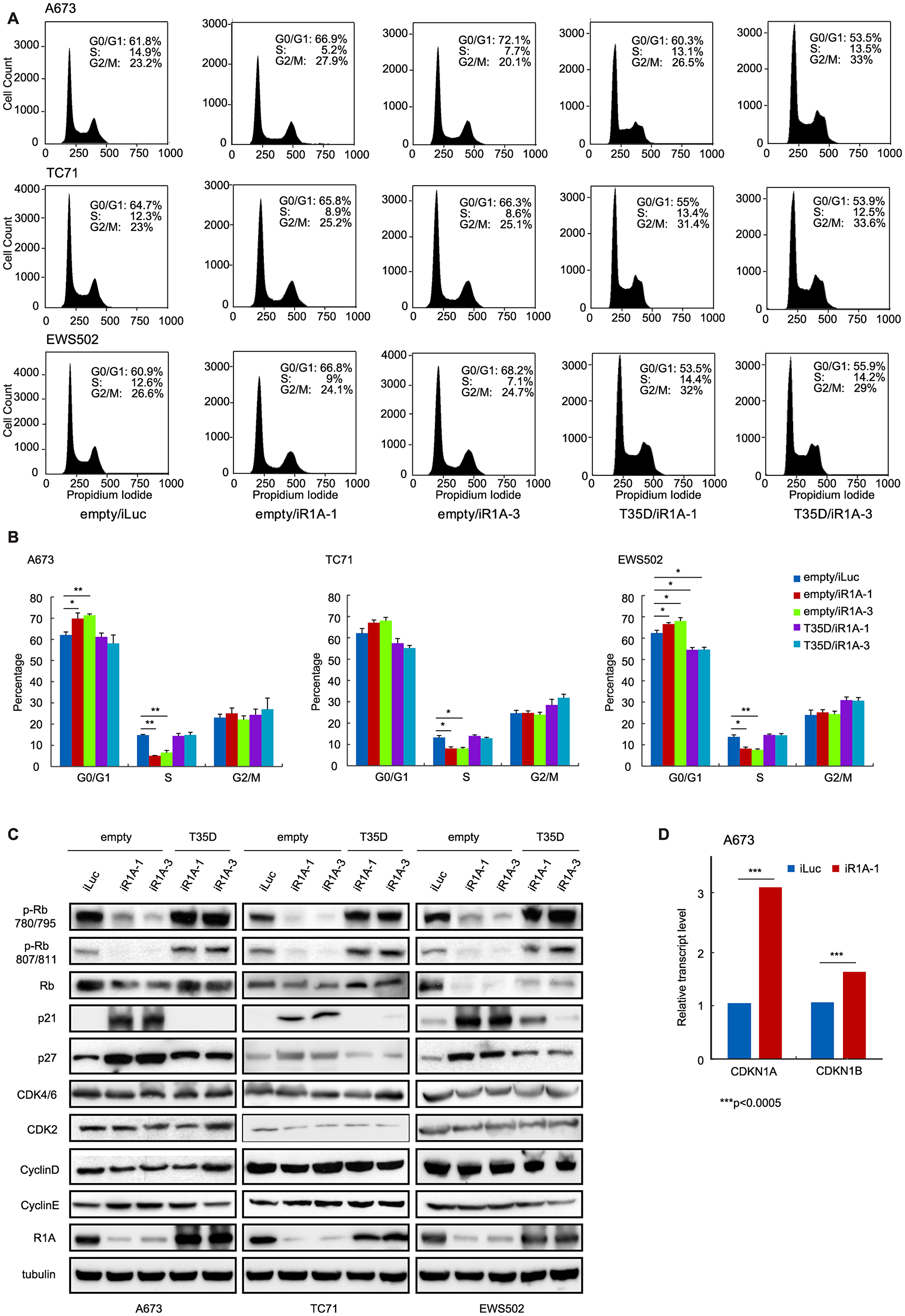 PPP1R1A controls G1 to S transition in ES cell cycle.
