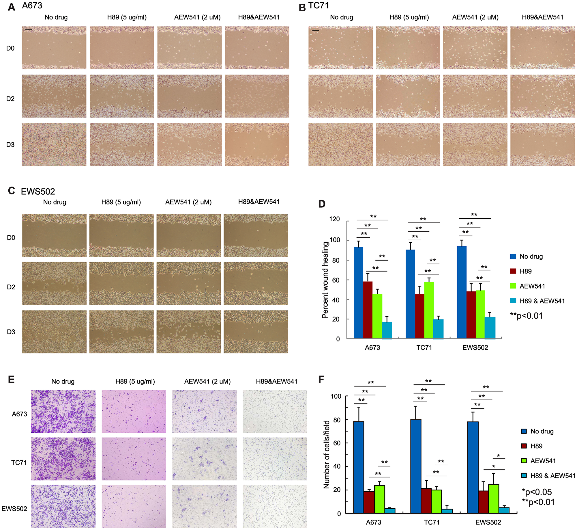 Simultaneous inhibition of PPP1R1A and IGF-1R pathways is more effective in limiting ES cell migration than single treatment.