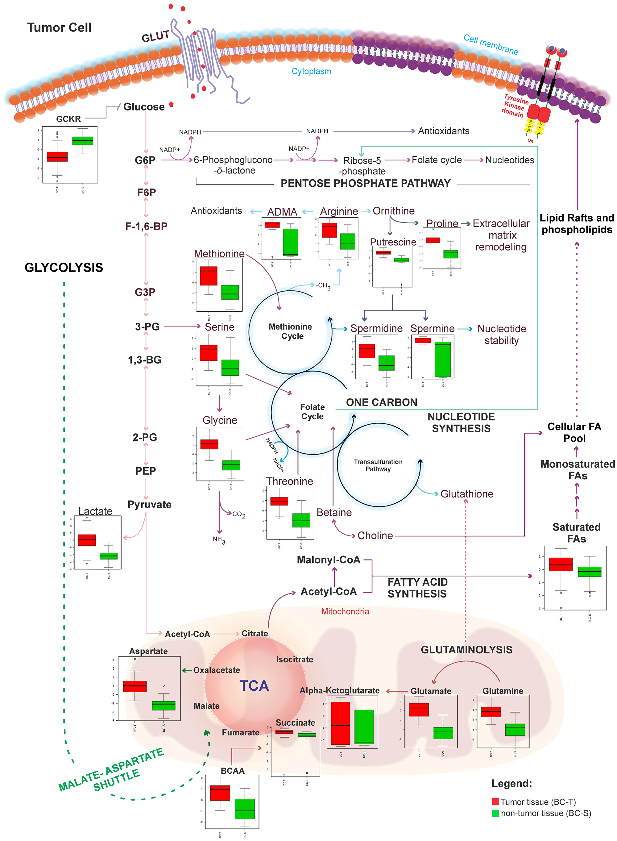 Metabolic network map between IDC and non-tumor adjacent breast tissues according to the main metabolites identified in this study.